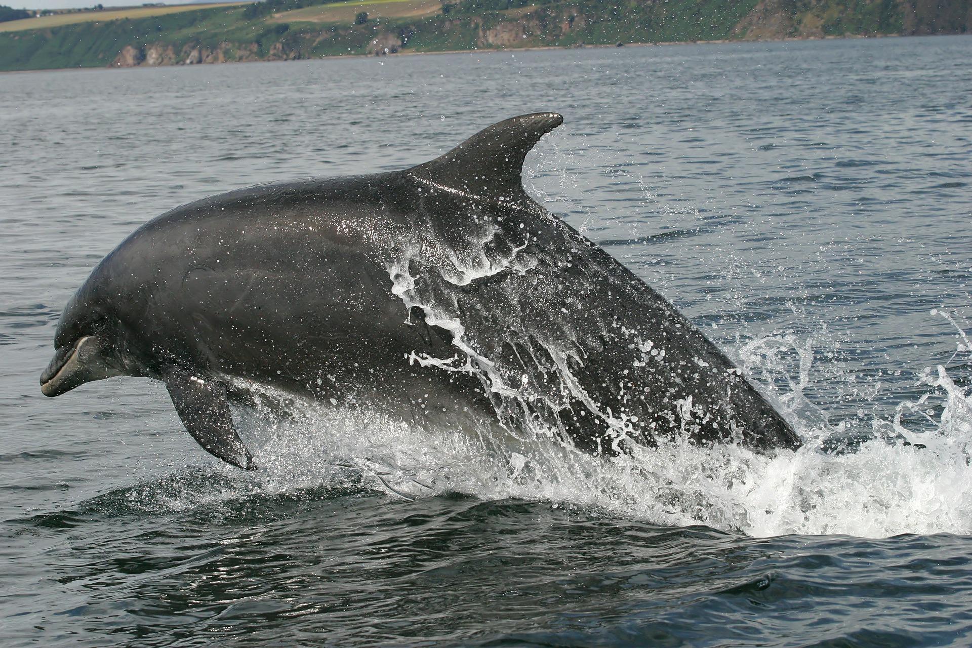Dolfijn zwemt met zeilend vrachtschip mee het Noordzeekanaal in [video]