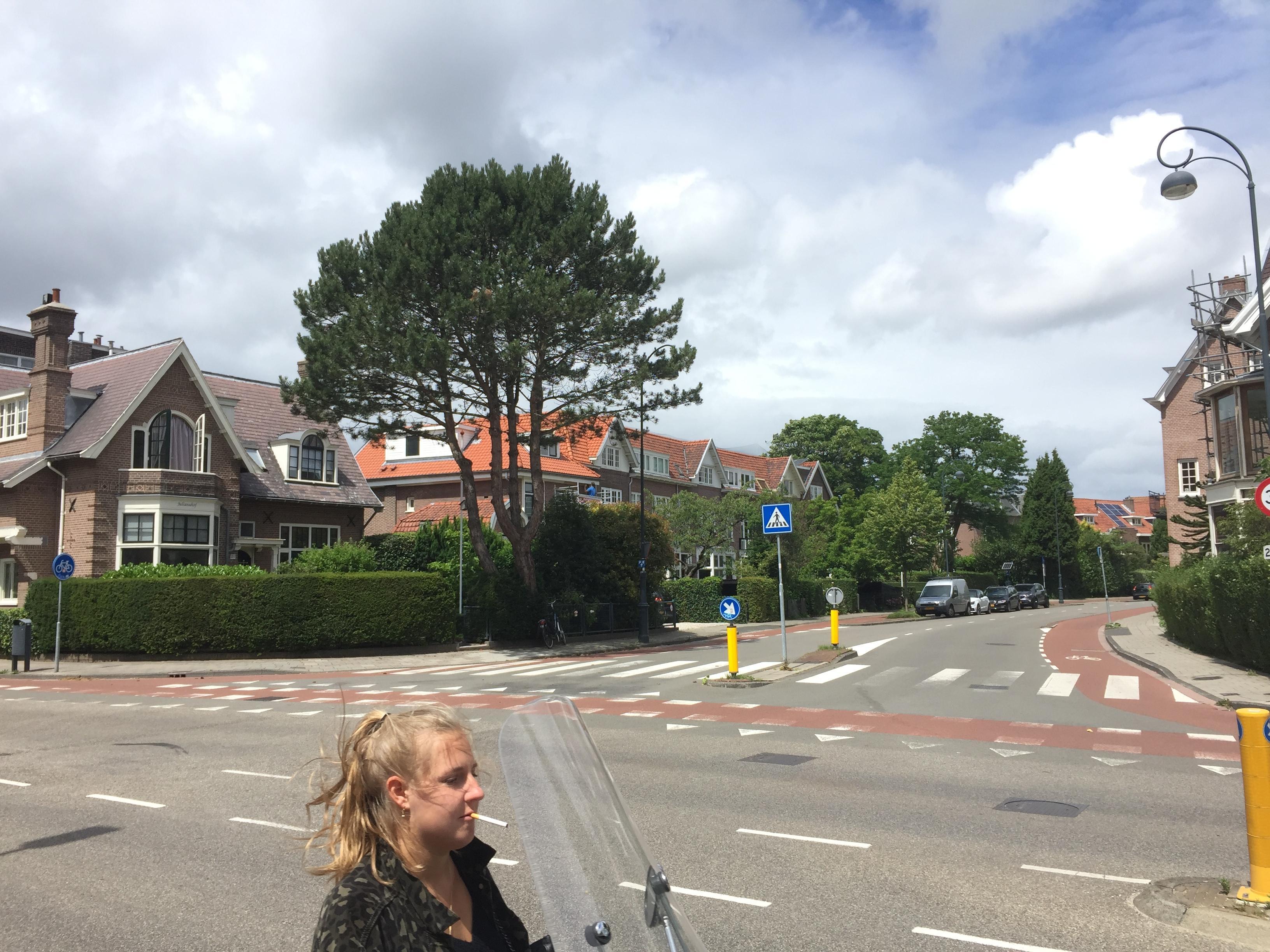 'Spookbomen' in Haarlem in kaart gebracht; 'Nu ook waardevolle bomen in tuinen op beschermende lijst'