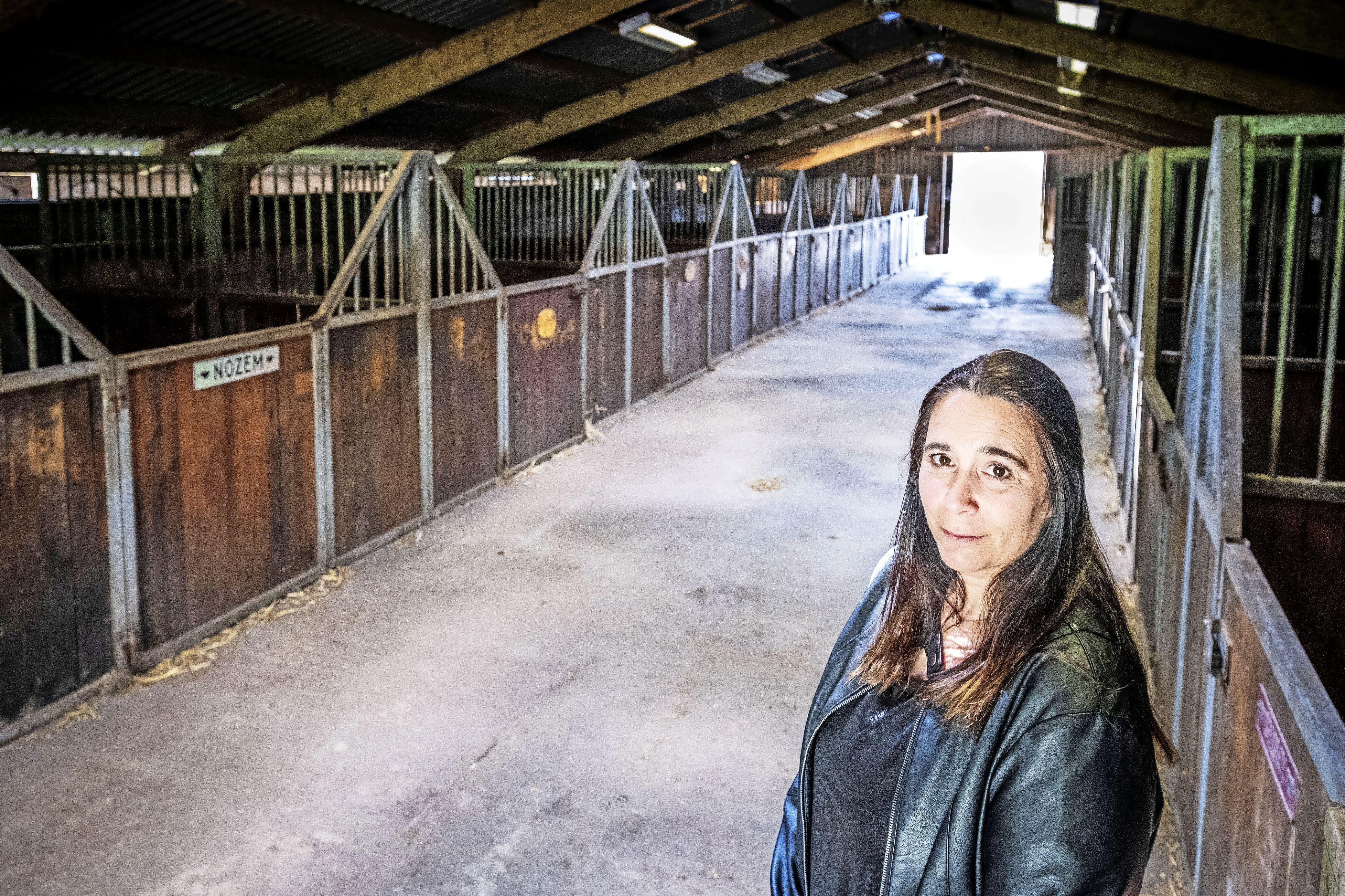 De stoeterij ligt stil, haar zorgboerderij komt in de knel. Paardenfokster Manuela Snijder zit door reconstructie 'dodenweg' N241 met de handen in het haar