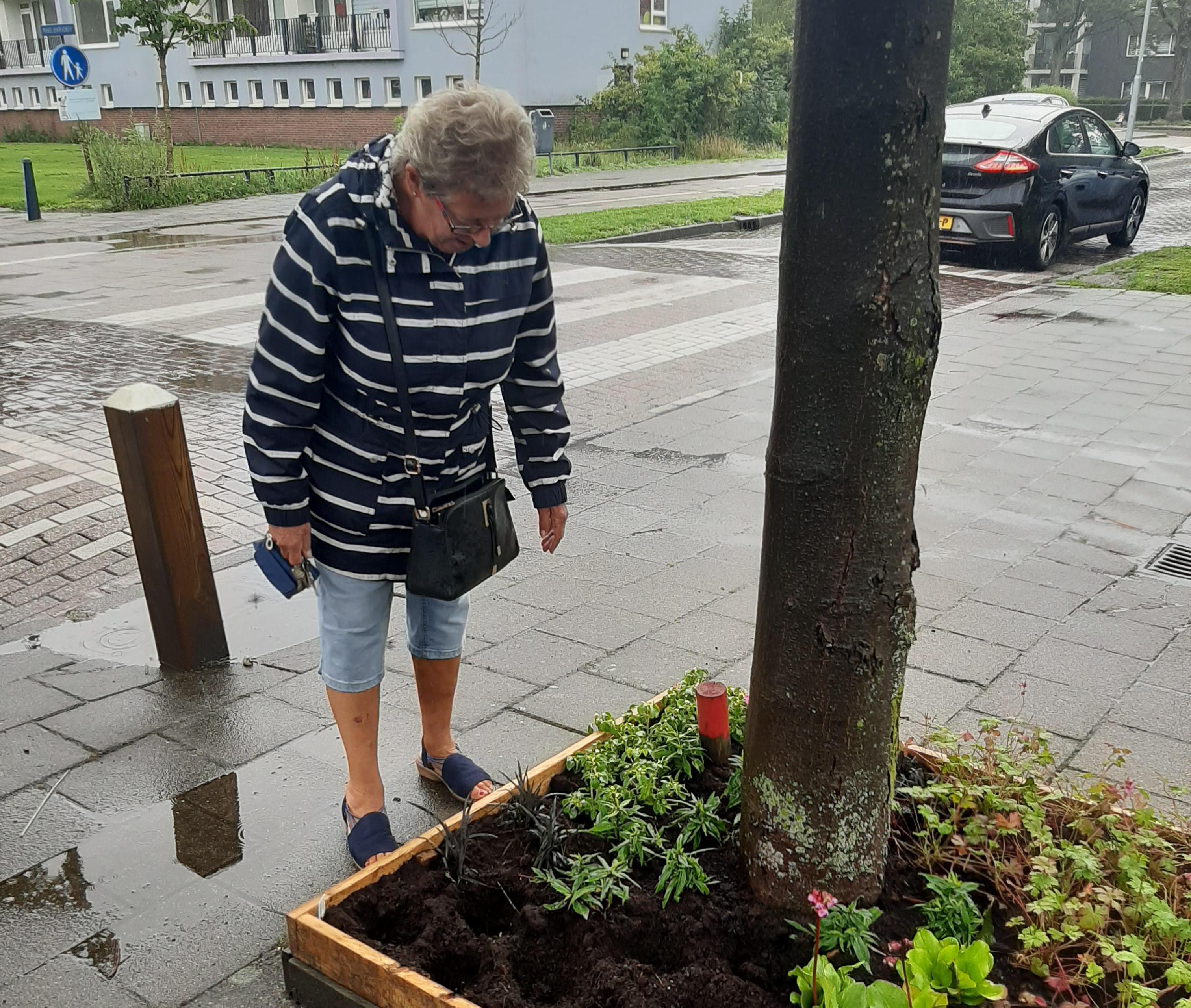 Plantenrover blijft toeslaan in Haarlem-Parkwijk: 'Zonde, want het was hartstikke mooi'