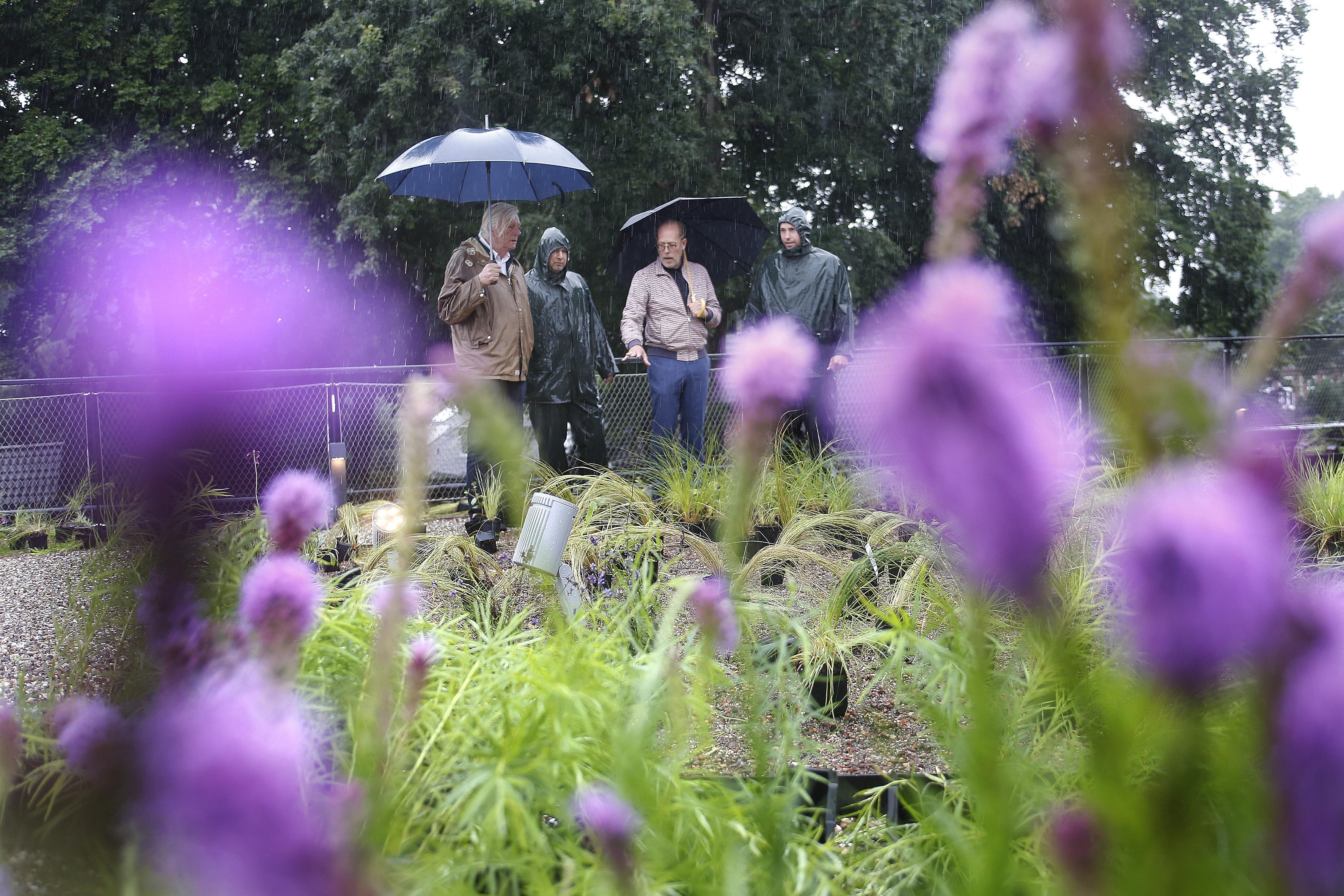 Tuinarchitect schildert met planten bij Singer