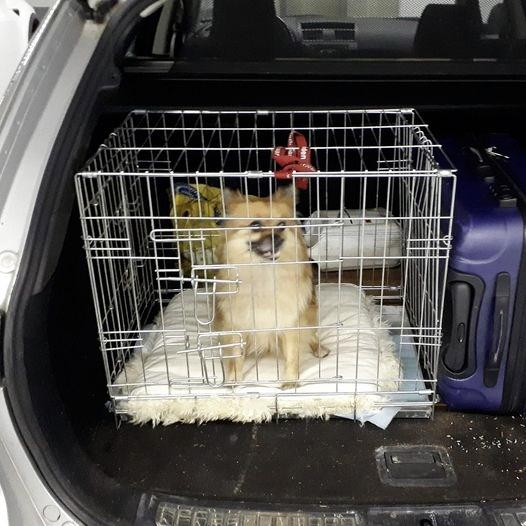 Politie Haarlem bevrijdt hond uit afgesloten kofferbak, eigenaar: 'Ik was maar even weg'