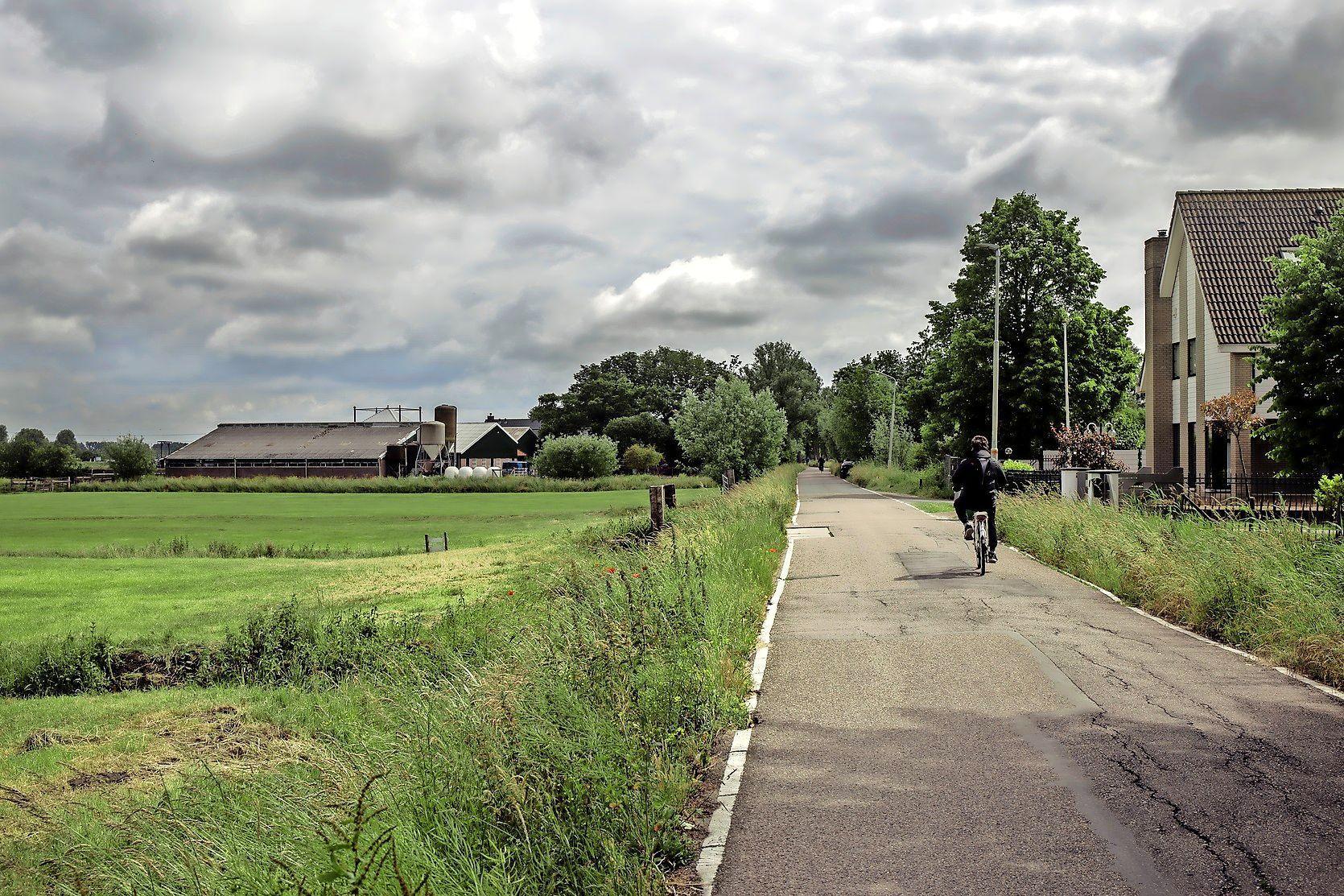 Bomen Zuid Schalkwijkerweg gered, maar voor hoe lang? Haarlem trekt kapvergunning noodgedwongen in