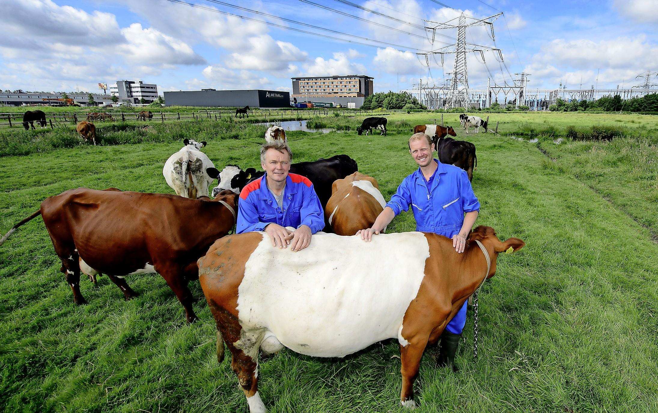 Boeren Brouwer en Koeman moeten koeien ruimen