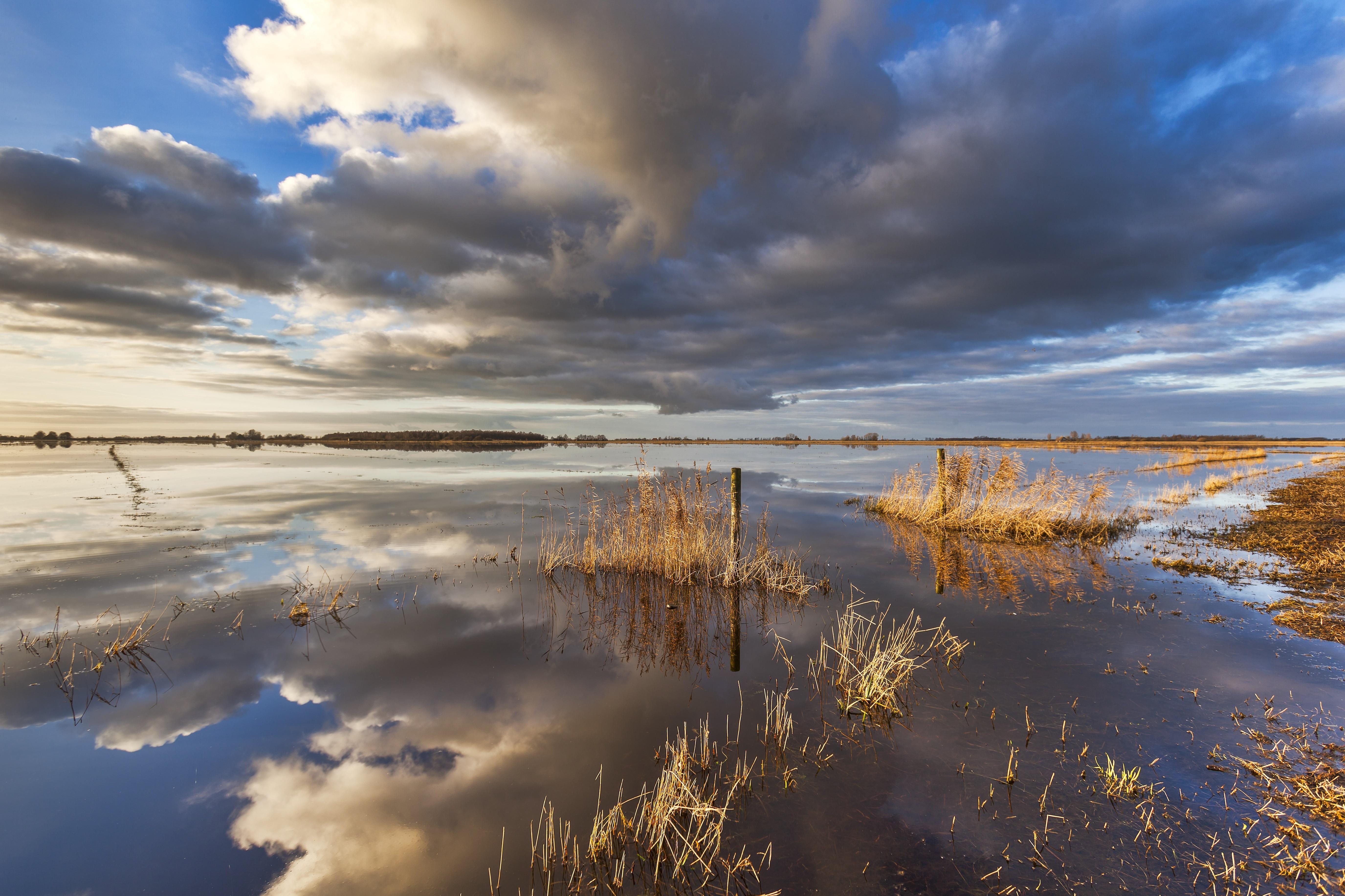Vogels, vissen en planten komen in het IJsselmeer onvoldoende aan hun trekken. Tijd voor actie met het project Wieringerhoek dat in 2025 zijn beslag moet krijgen