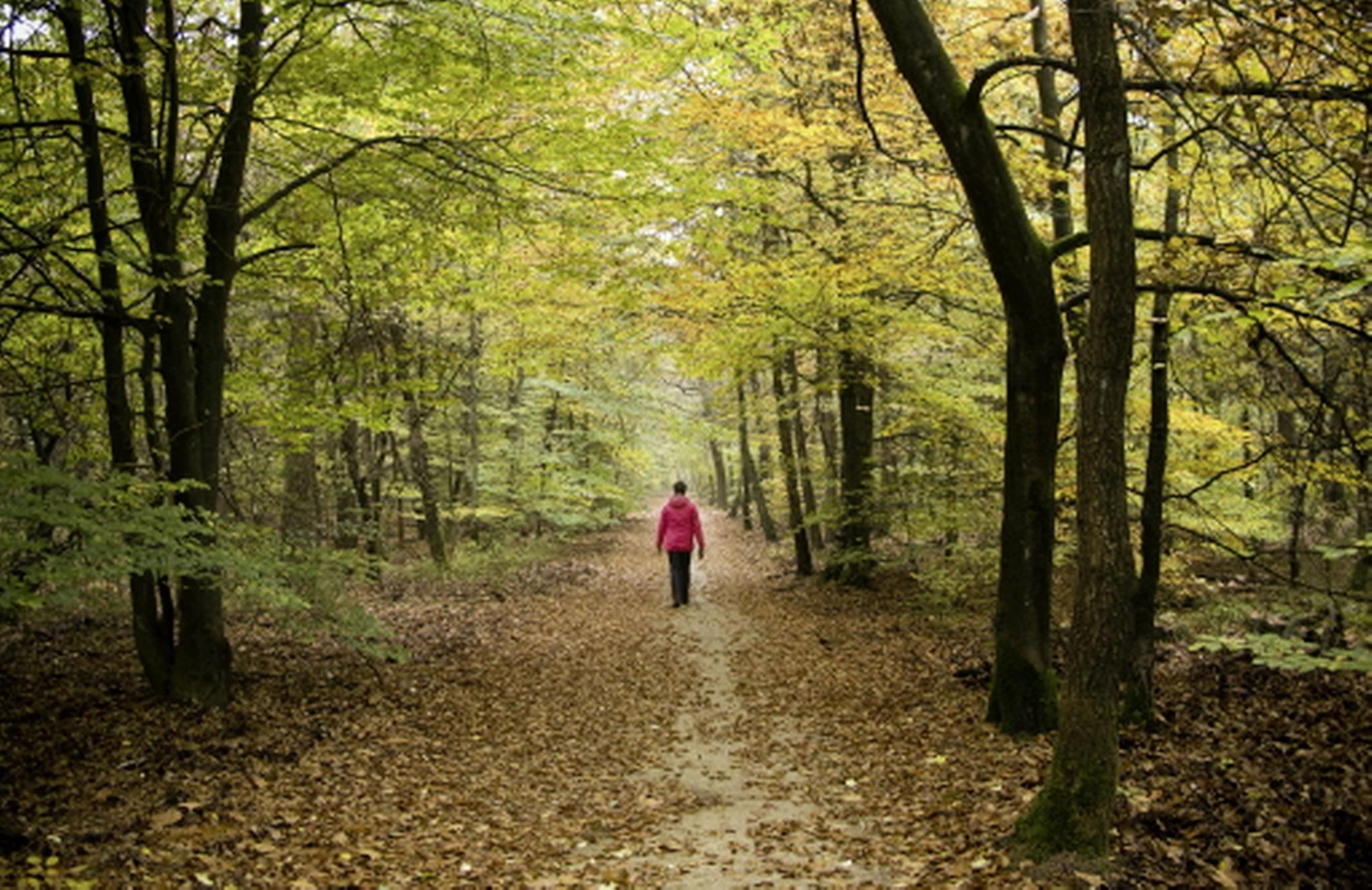Natuur niet offeren voor woningen: geef groen meer ruimte   stelling