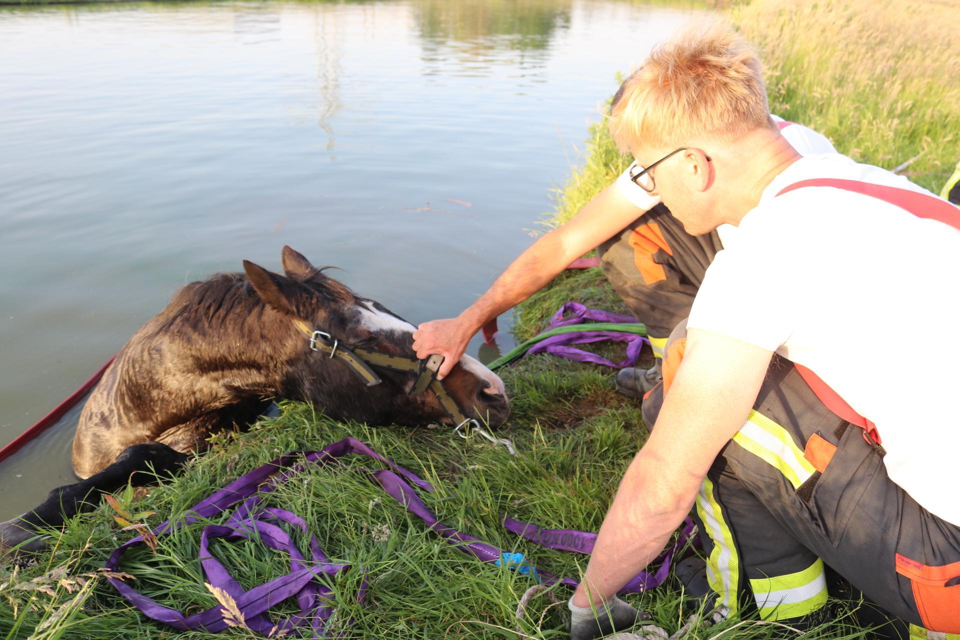 Brandweer redt paard van de verdrinkingsdood in Sassenheim