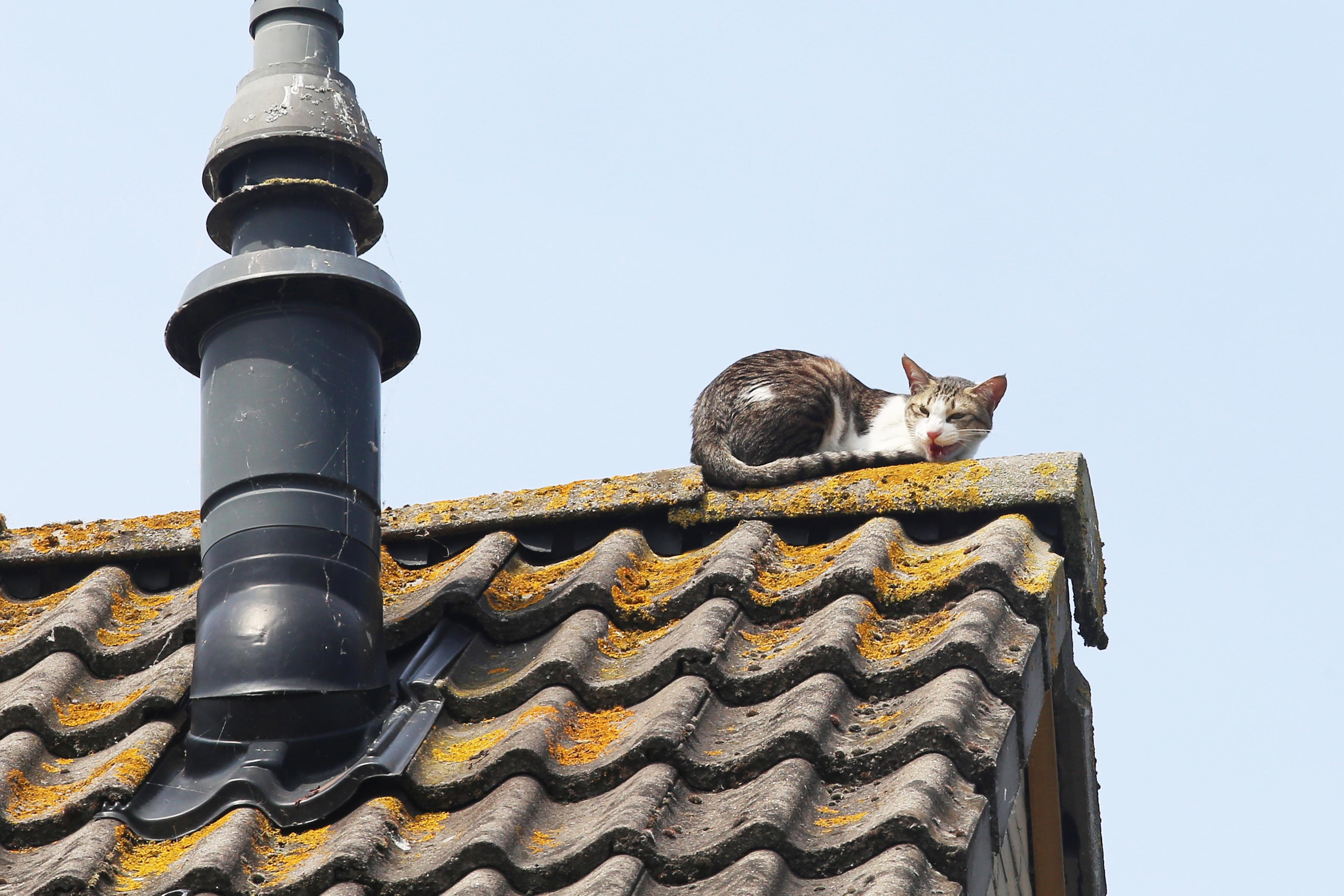 Gemeente Heemstede vindt kleur van dakpannen niet goed en eist vervanging; huiseigenaar stapt naar de rechter
