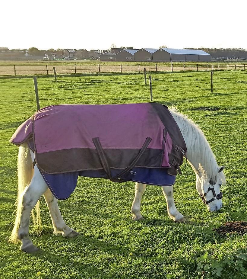 CDA Teylingen wil helderheid over handhaving paardenweitjes