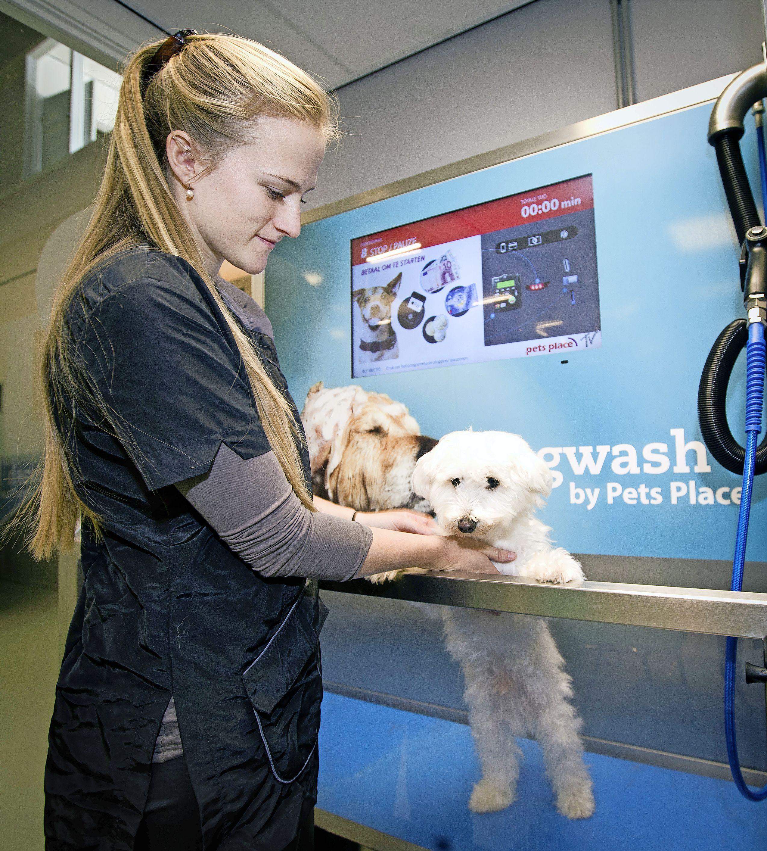 Voortaan zelf je hond wassen en drogen bij dierenspeciaalzaak in Zwaagdijk