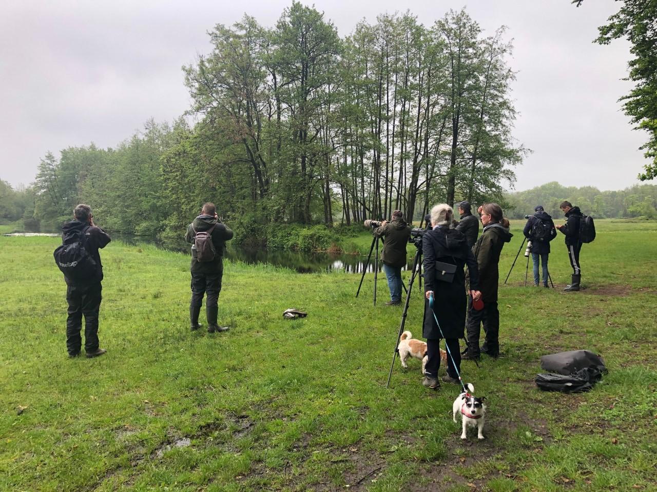 Zeldzame ralreiger laat zich zien tussen Bussum en de Hilversumse Meent: vogelaars staan rijen dik met camera in de aanslag