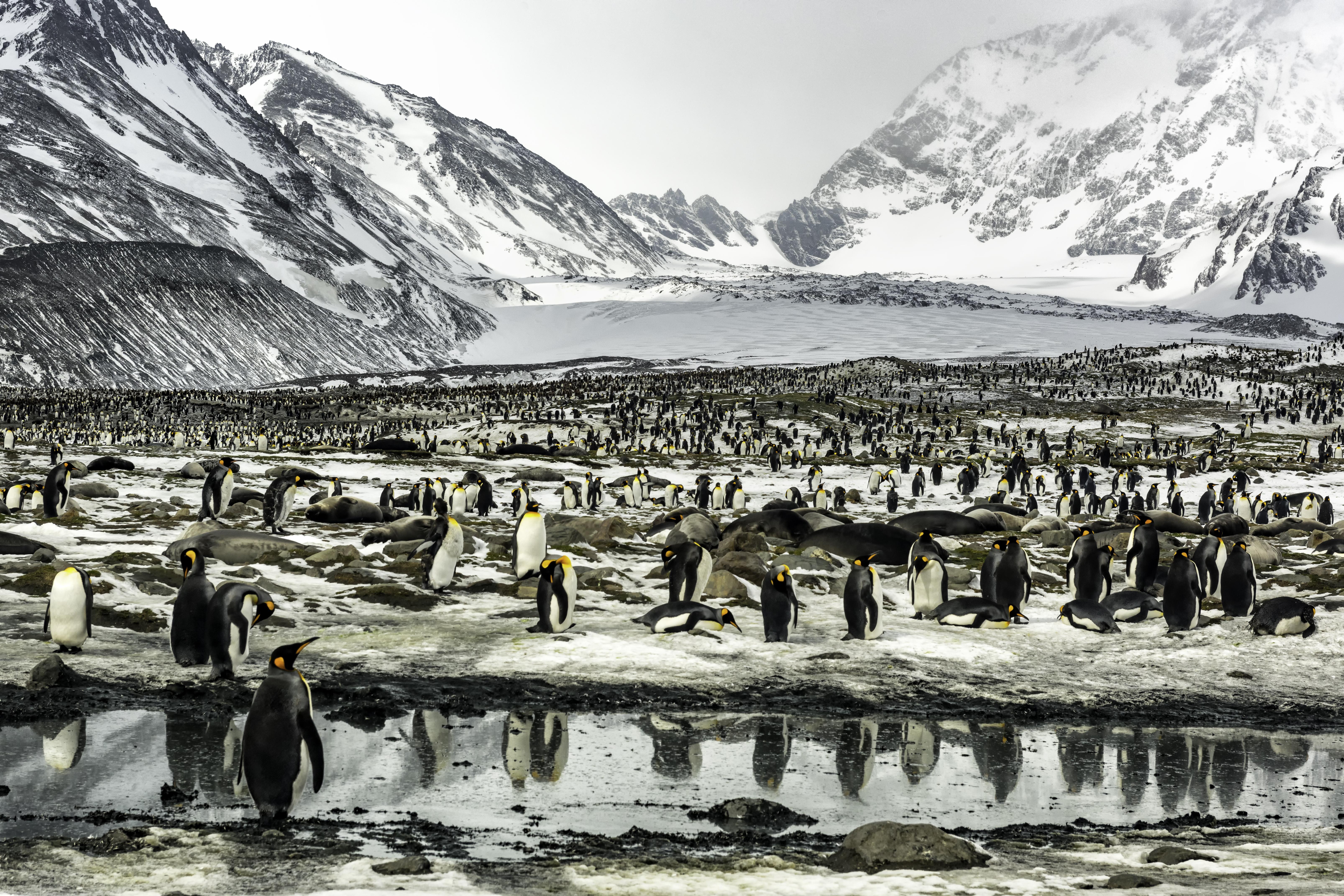 Professor Han Lindeboom vreest slecht jaar voor de pinguïns op Zuid-Georgia: ijsberg A-86a op ramkoers