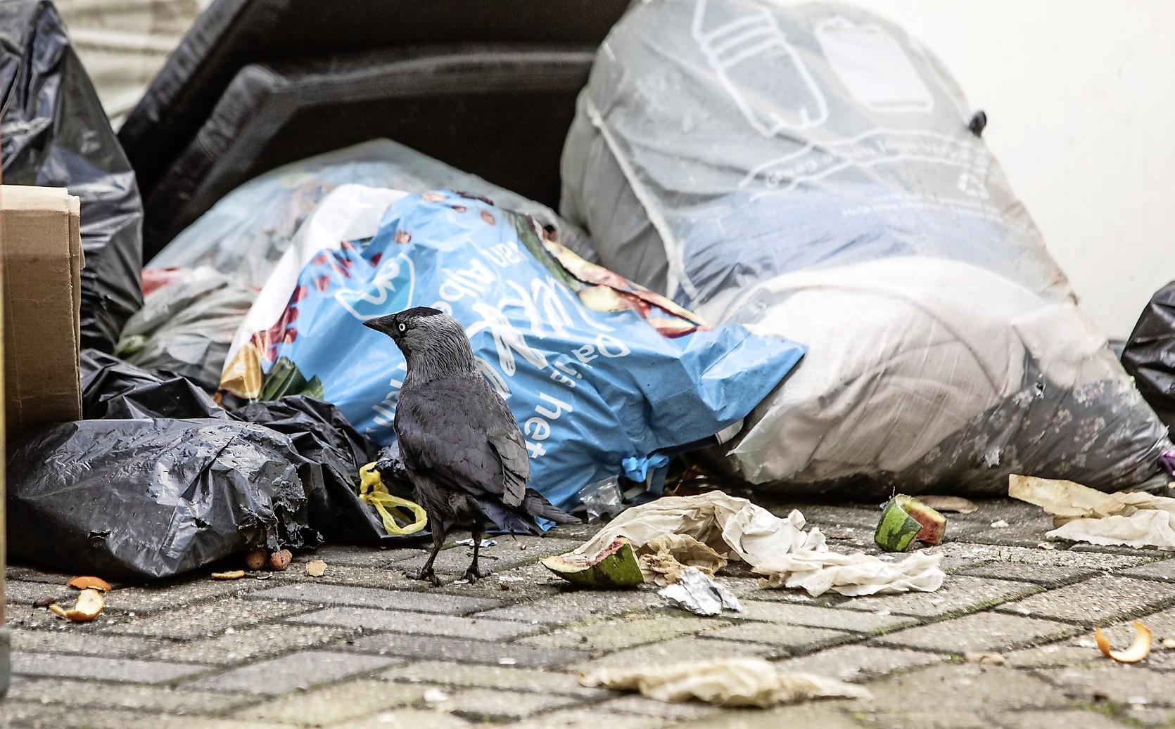 Recycleplan Opmeer kost gemeente vooral in het begin meer. 'Betalen na legen van grijze kliko kan per 1 januari 2022 beginnen'