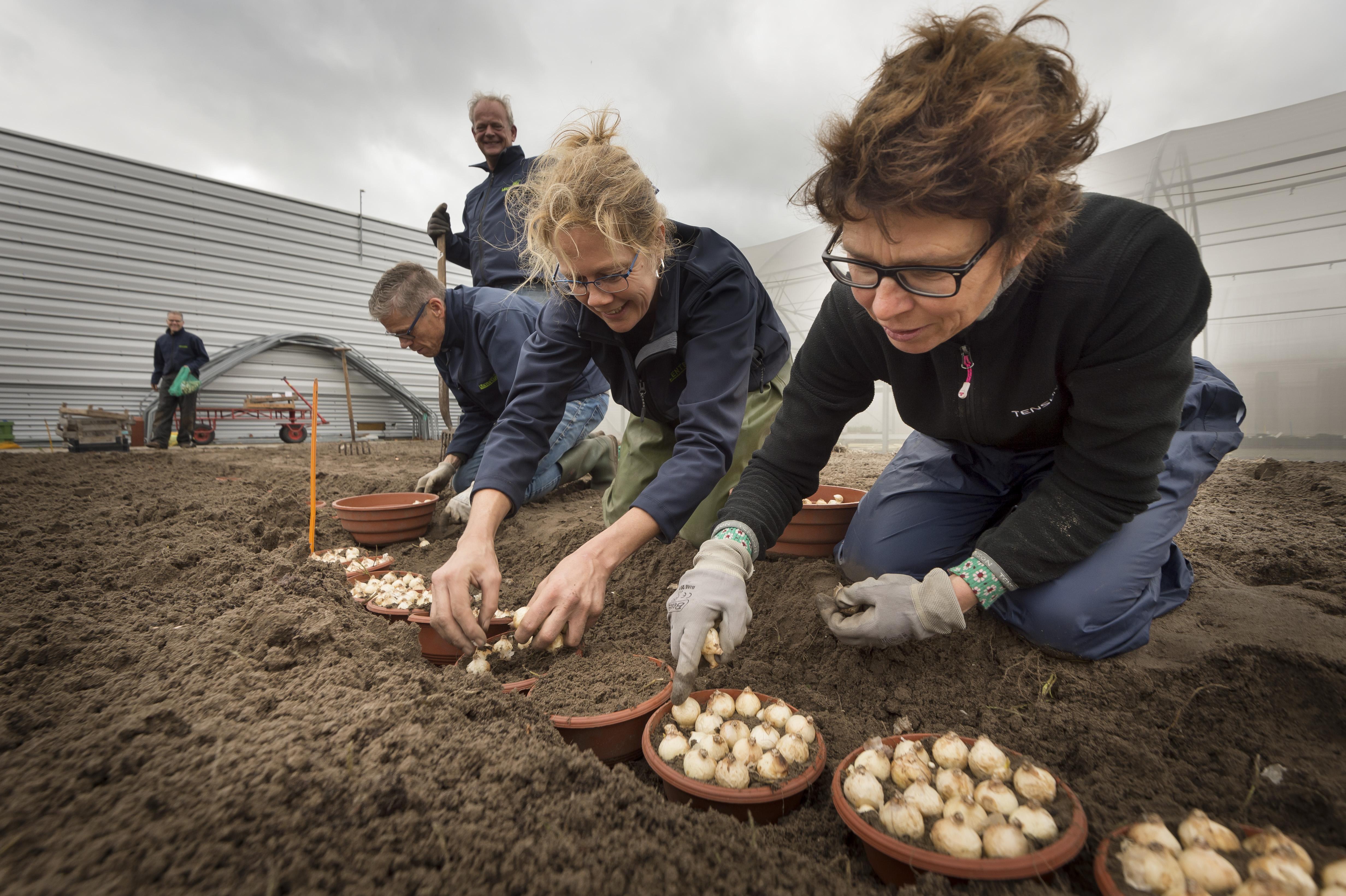Bollen Lenteflora zitten weer in de grond