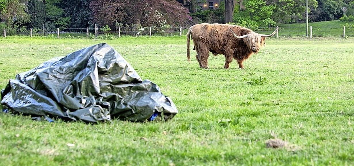 Forse boete voor vrouw uit Grootschermer vanwege verwaarlozen van hele collectie dieren