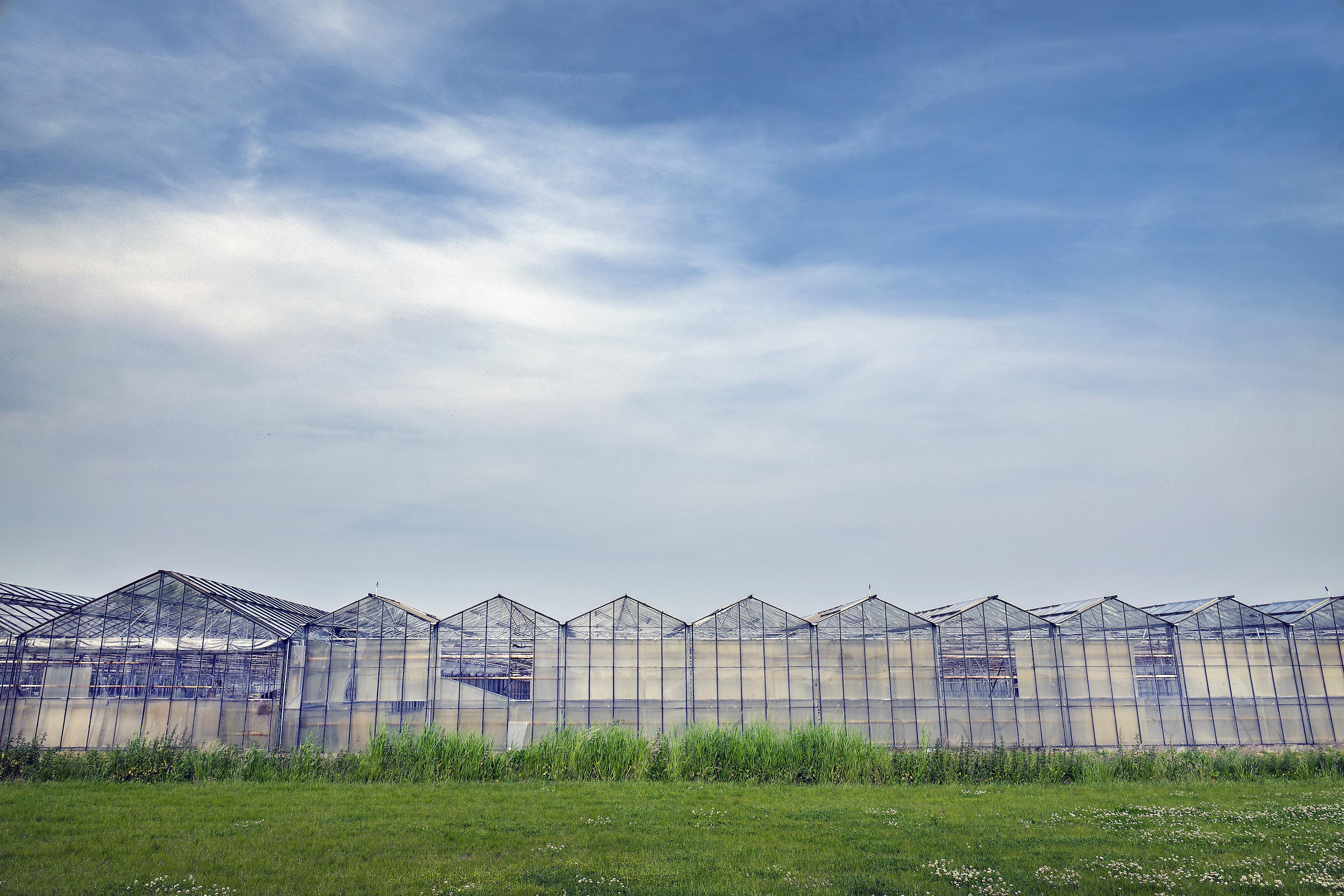 Geen woningbouw in Rijsenhout? 'Het dorp verpaupert en loopt leeg'