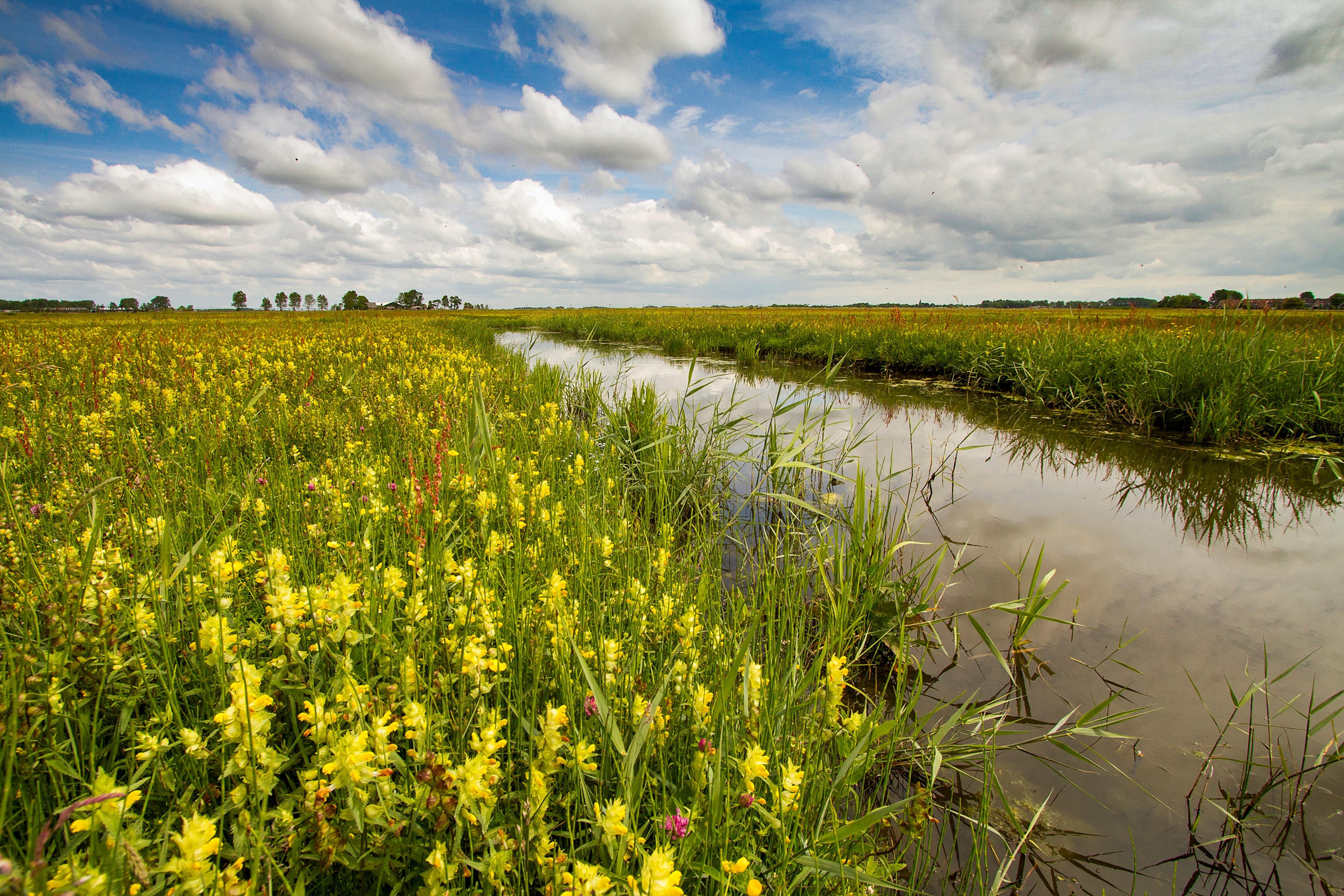 Natuurorganisatie Landschap Noord-Holland wil een miljoen vierkante meter natuur kopen