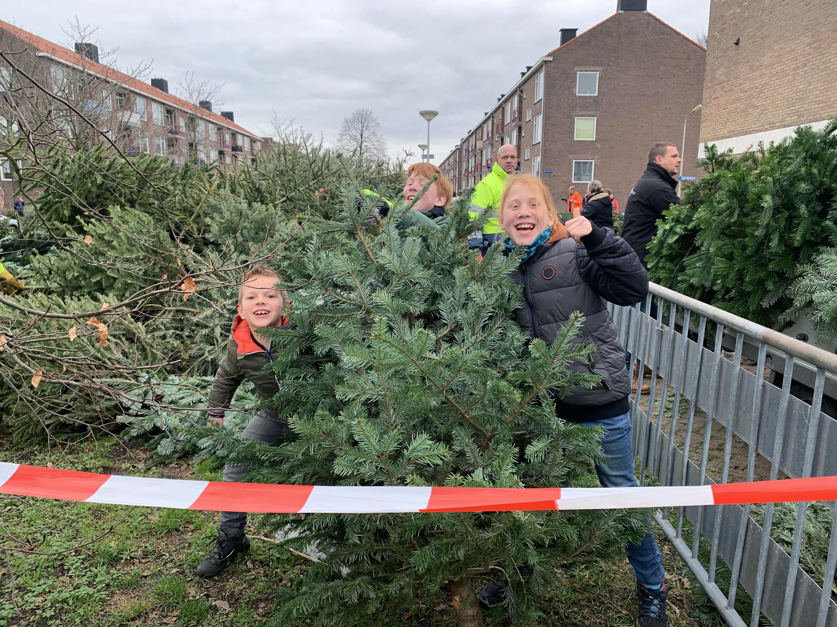 Met zweet op het voorhoofd brengen Luuk en Jay een kerstboom van zeven meter naar de inzamelplek in IJmuiden