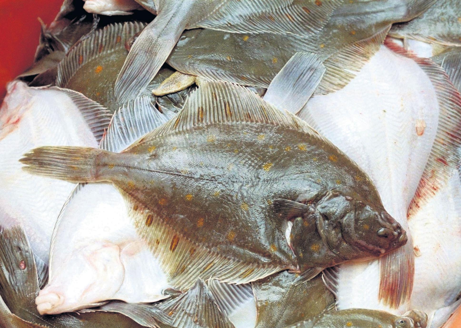 Parlevliet & Van der Plas verstevigt platvis-poot, overname Volendamse visverwerker