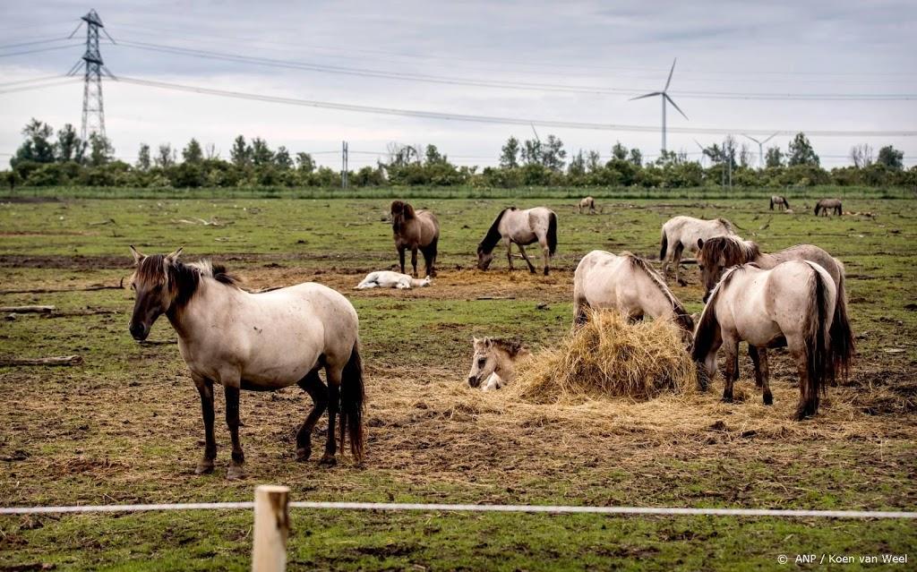 Rechter besluit over slacht paarden Oostvaardersplassen