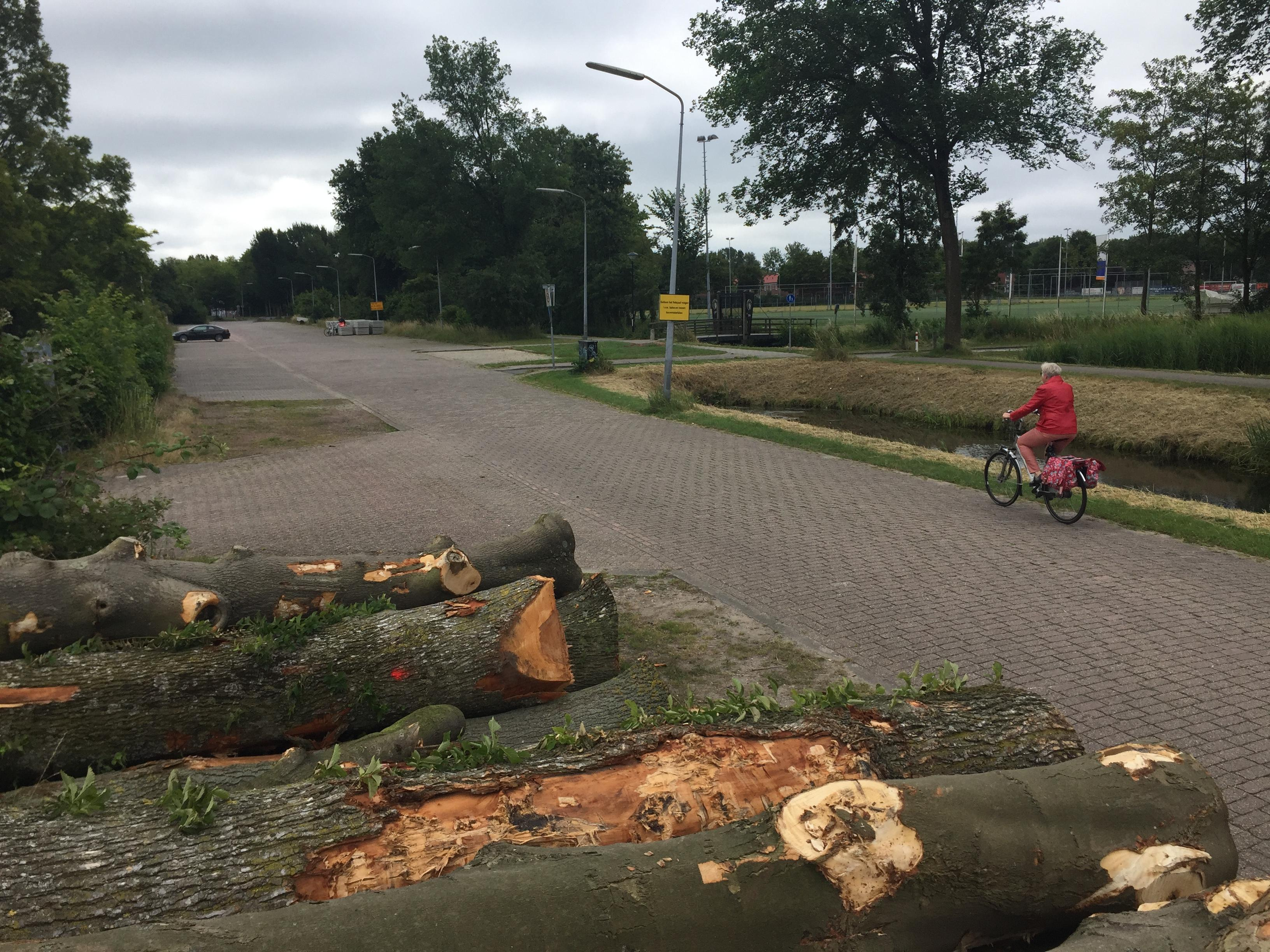 Hoorn maakt vaart met rooien bomen Holenweg