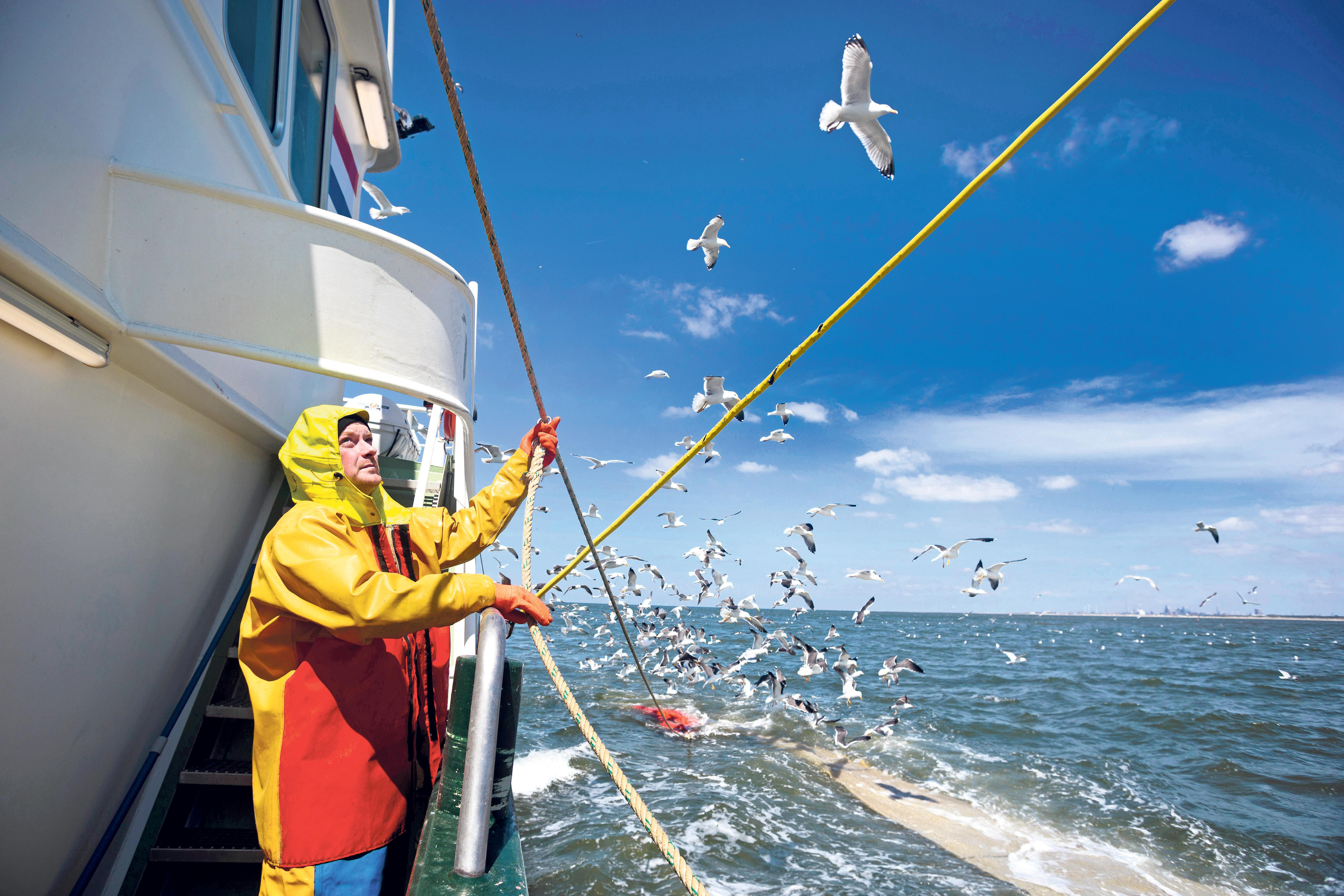 Uiteindelijk hebben de garnalenvissers gelijk gekregen. Niet zij hadden het fout, maar de overheid en de natuurclubs die schande riepen | Gastschrijver Willem den Heijer