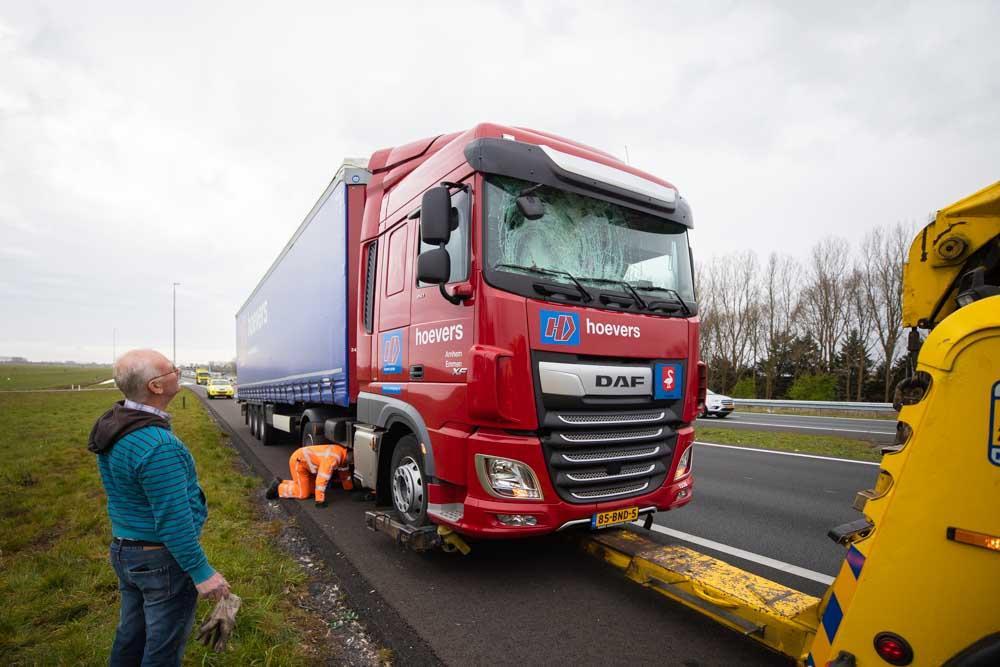 Zwaan overleden bij aanrijding met vrachtwagen op de A1 bij Eemnes