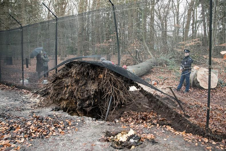 Omgewaaide boom vernielt hek bij kasteel Drakensteyn in Lage Vuursche