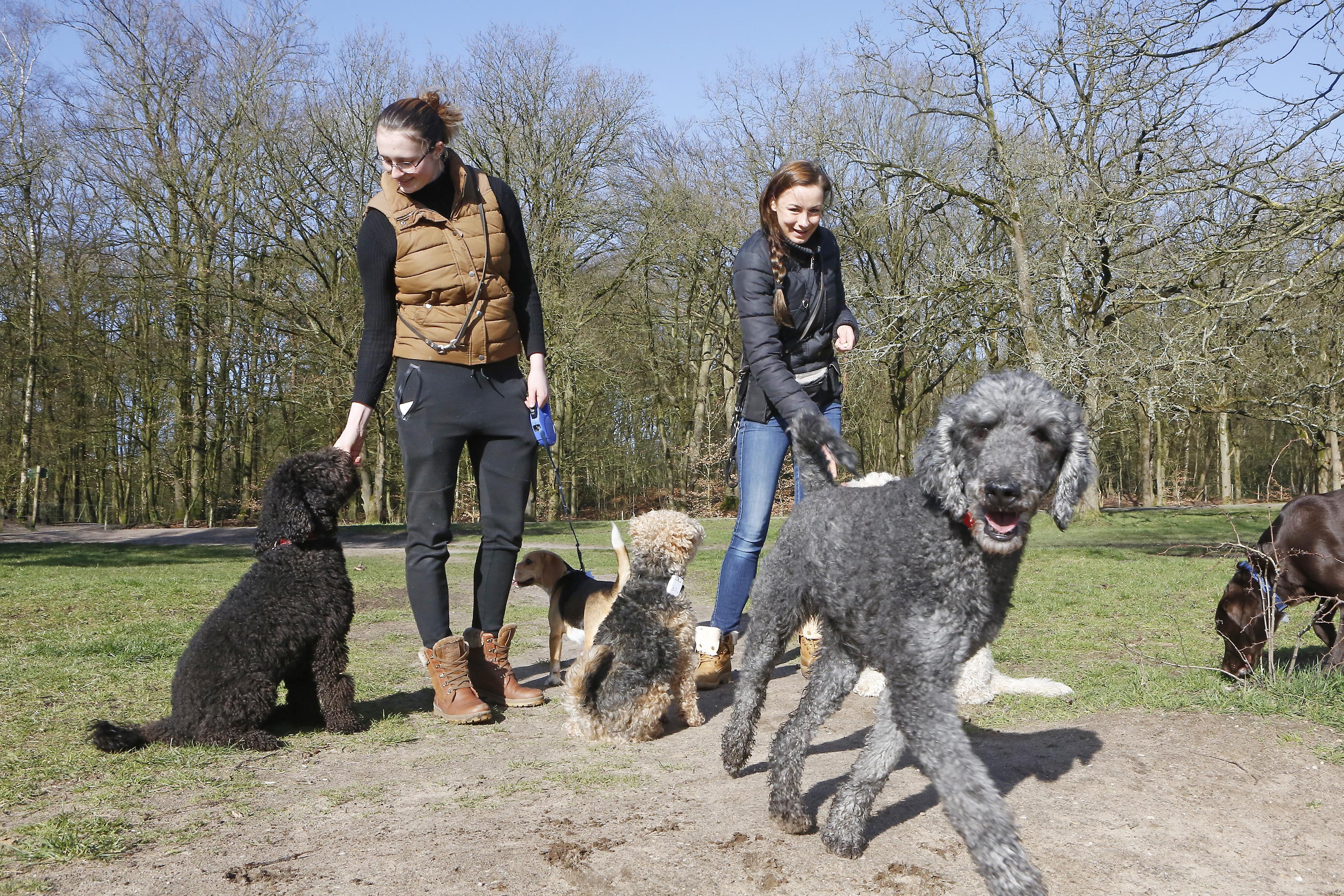 Geen uitzondering voor Gooise hondenuitlaatservices in GNR-natuur, ondanks vurige pleidooien: 'Ze zijn straks niet meer welkom. Dat besluit wordt niet herzien'