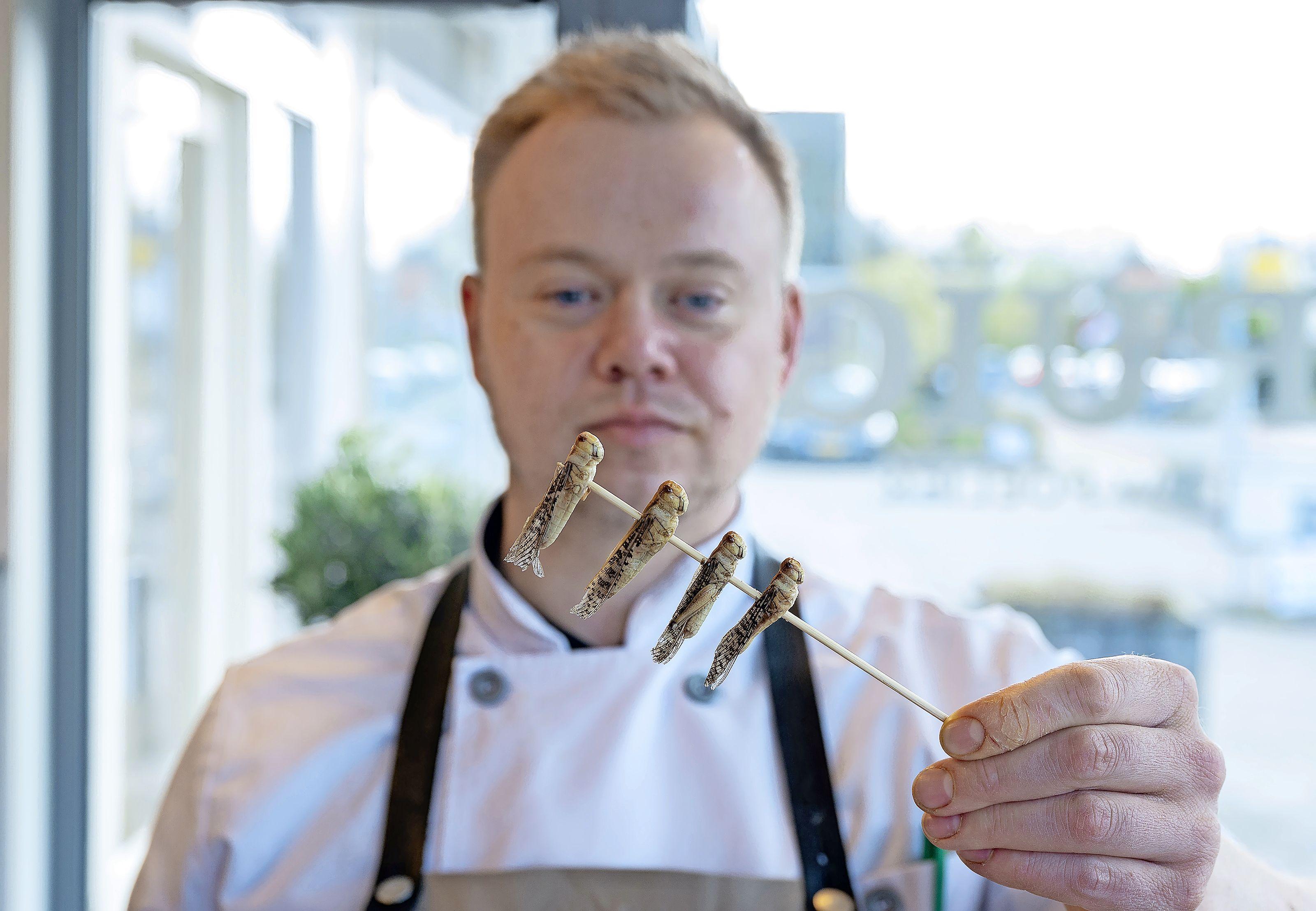 Eetbare meelwormen nu ook goedgekeurd voor mensen, poelier Ruig in Oostzaan verkoopt ze al jaren: 'Lekker in de salade'