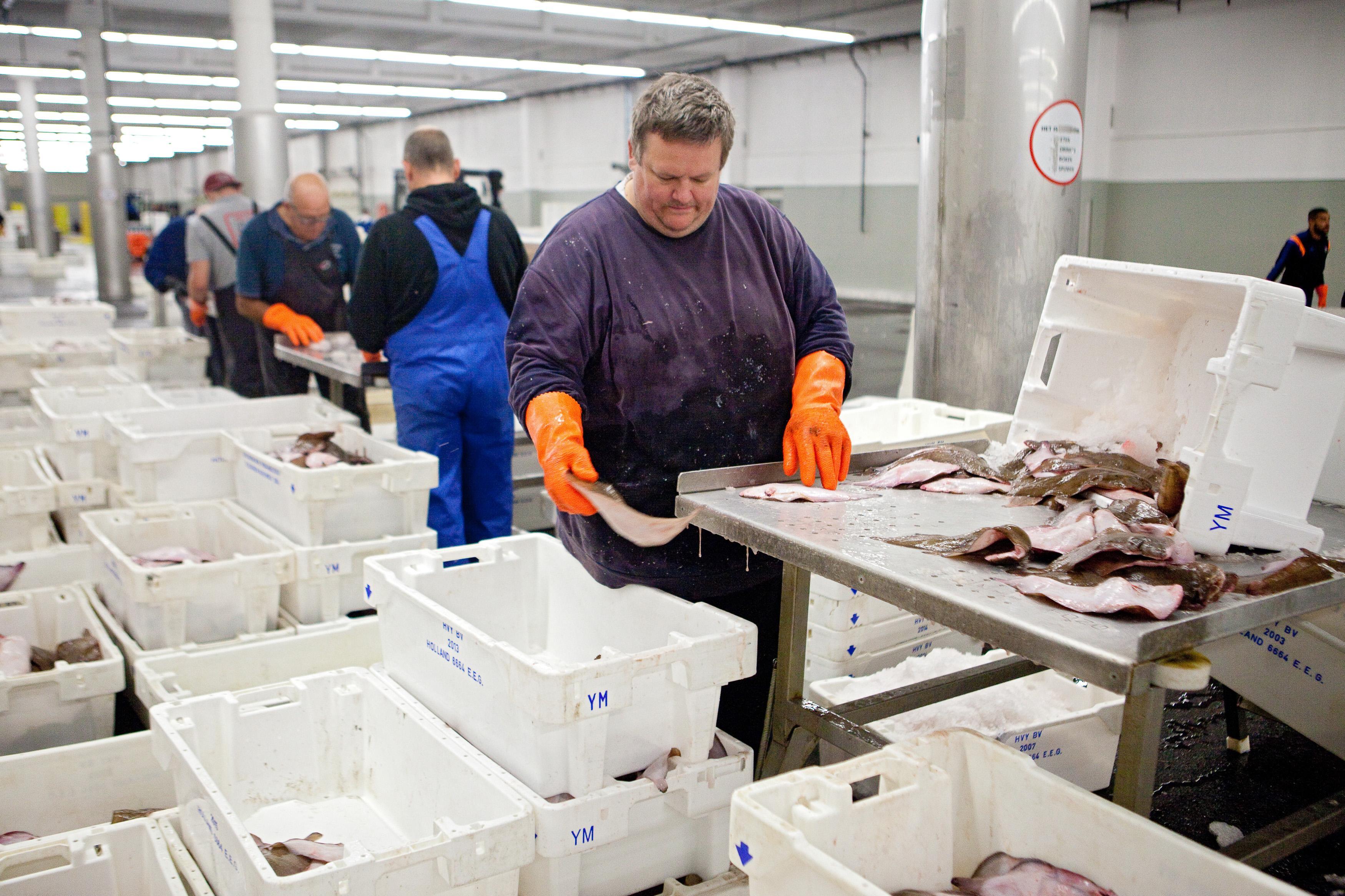 Op de visveiling in IJmuiden werd vorig jaar iets meer vis aangevoerd, de omzet daalde echter vanwege corona