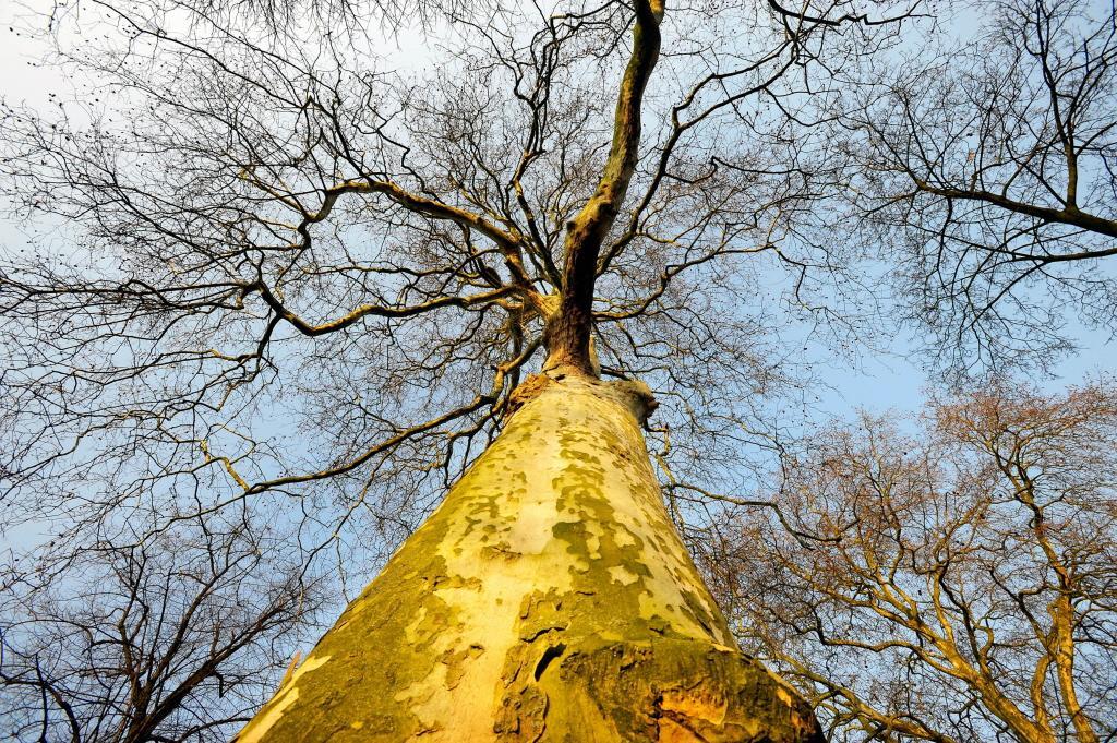 Haarlem wil kappen van bomen moeilijker maken met nieuwe verordening