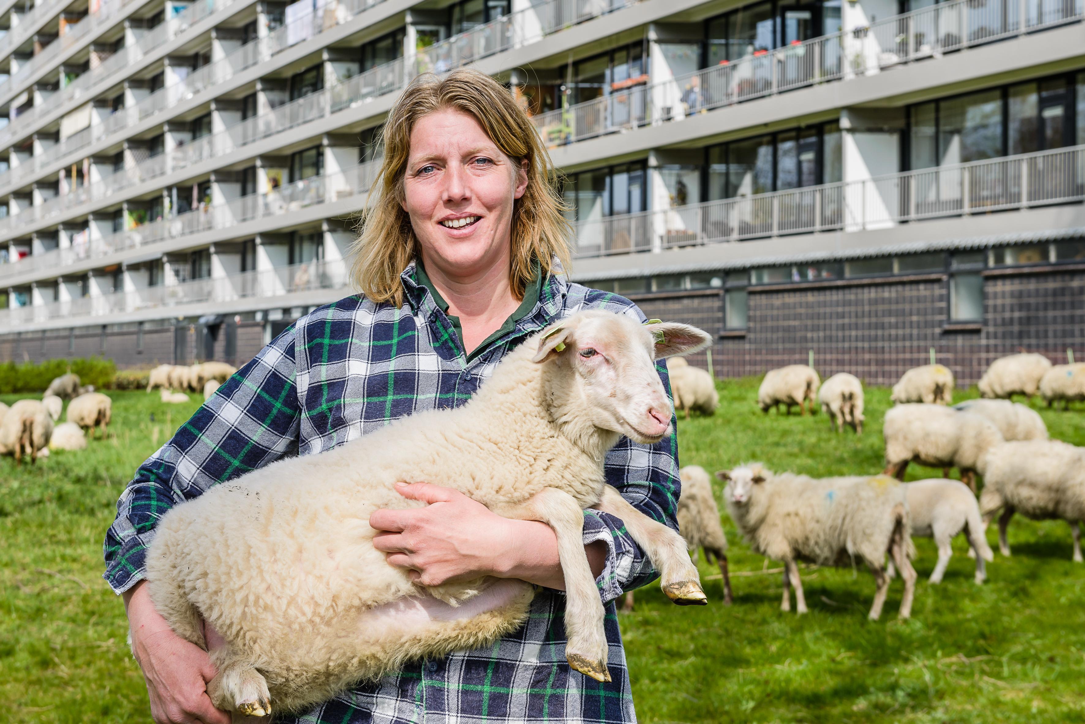 Dankzij bijzondere grondverkoop kunnen duizend schapen van Marijke voortaan lopend naar hun werk