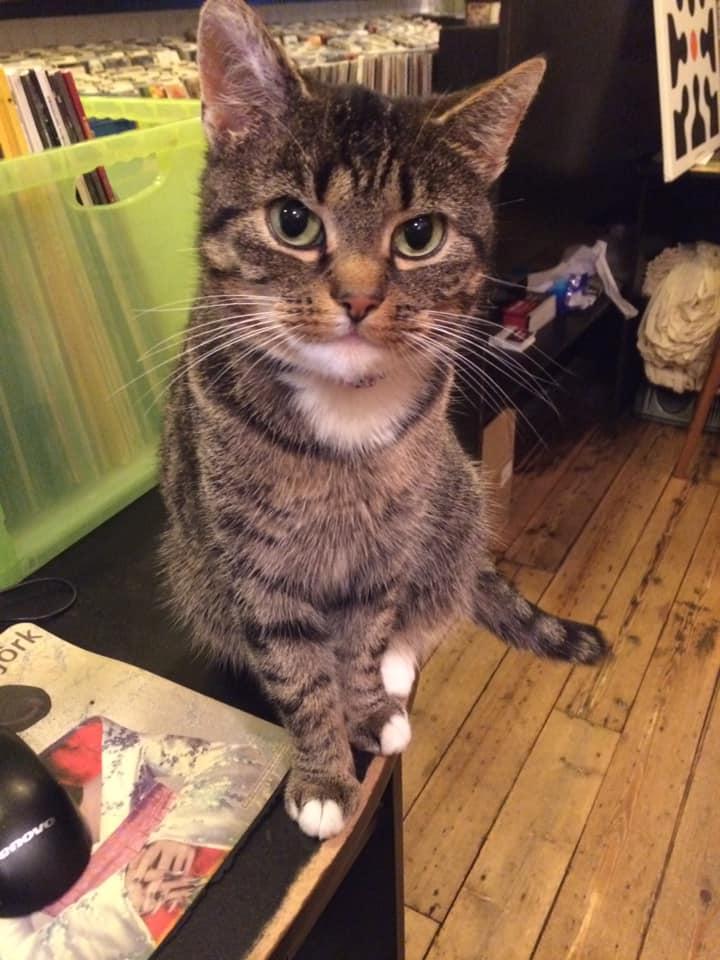 Gerard is een stoere kerel maar is er helemaal kapot van, kat Djano van zijn platenhuis 't Oor in Hilversum is zoek. Wie heeft 'mijn hartje' gezien?