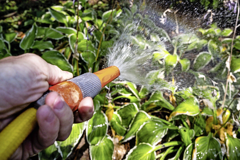 Tegels eruit, planten erin: nog bijna 7000 euro subsidie beschikbaar voor vergroenen tuin