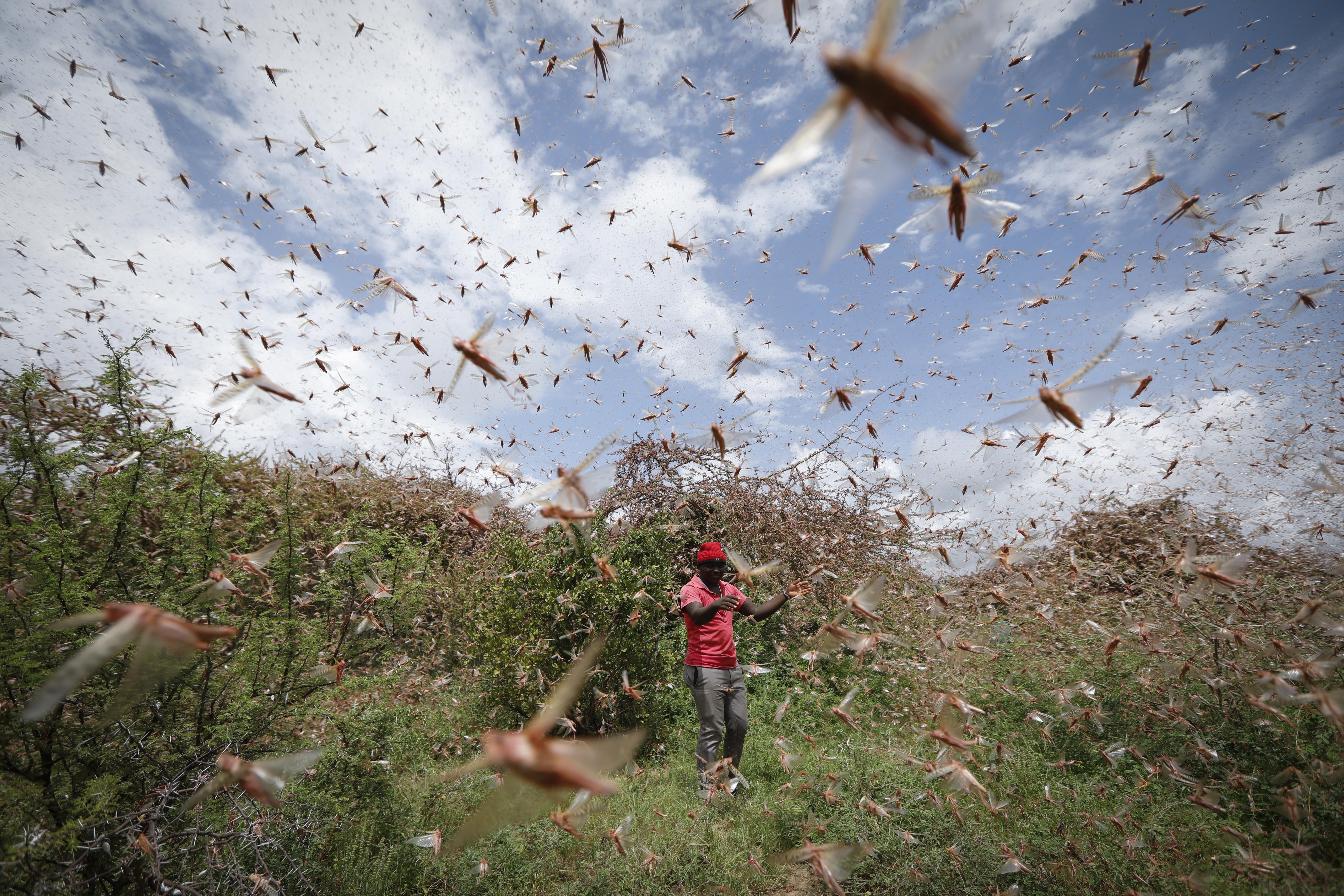 Niet alle virussen zorgen voor ellende. Dit kleine virus helpt tegen vraatzuchtige insecten.