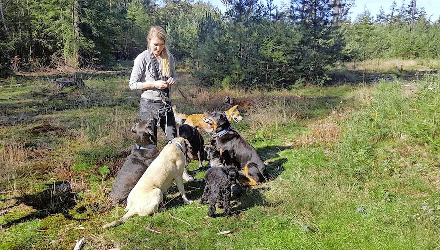 Omheind hondenuitlaatgebied op landgoed Pijnenburg laat nog maanden op zich wachten, zegt wethouder Erwin Jansma. Landgoedeigenaar kan gedraai van Baarn niet meer volgen