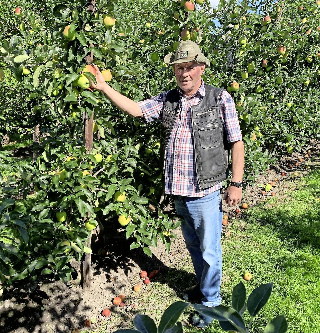 Vroegste appelras Delcorf vanaf vandaag weer verkrijgbaar in de West-Friese fruitstalletjes