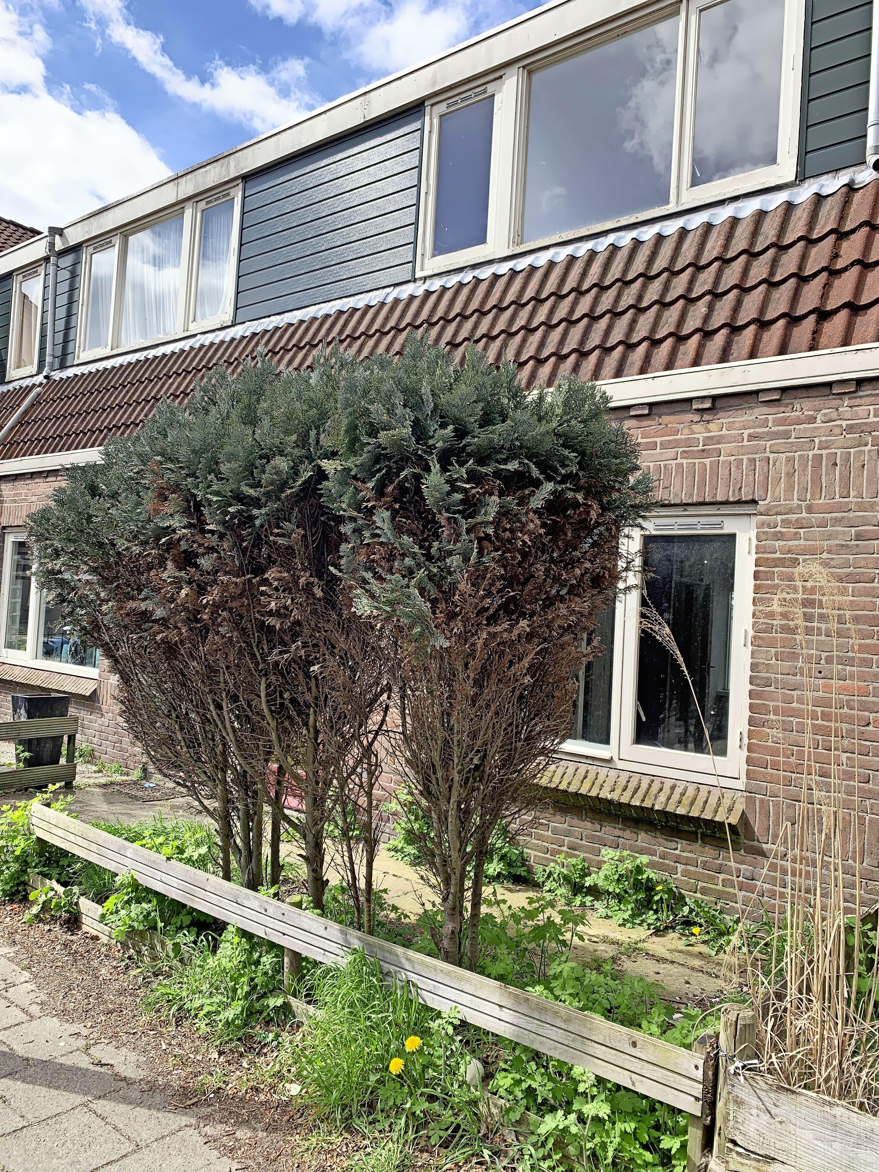 Twee sociale huurwoningen in Santpoort-Noord staan al jaren leeg, maar gaan na een grondige renovatie weer de verhuur in