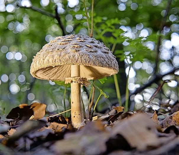 Afscheid van de opruimers van de natuur: hier is de derde lichting lezersfoto's van paddenstoelen, 'plus eentje voor oma'