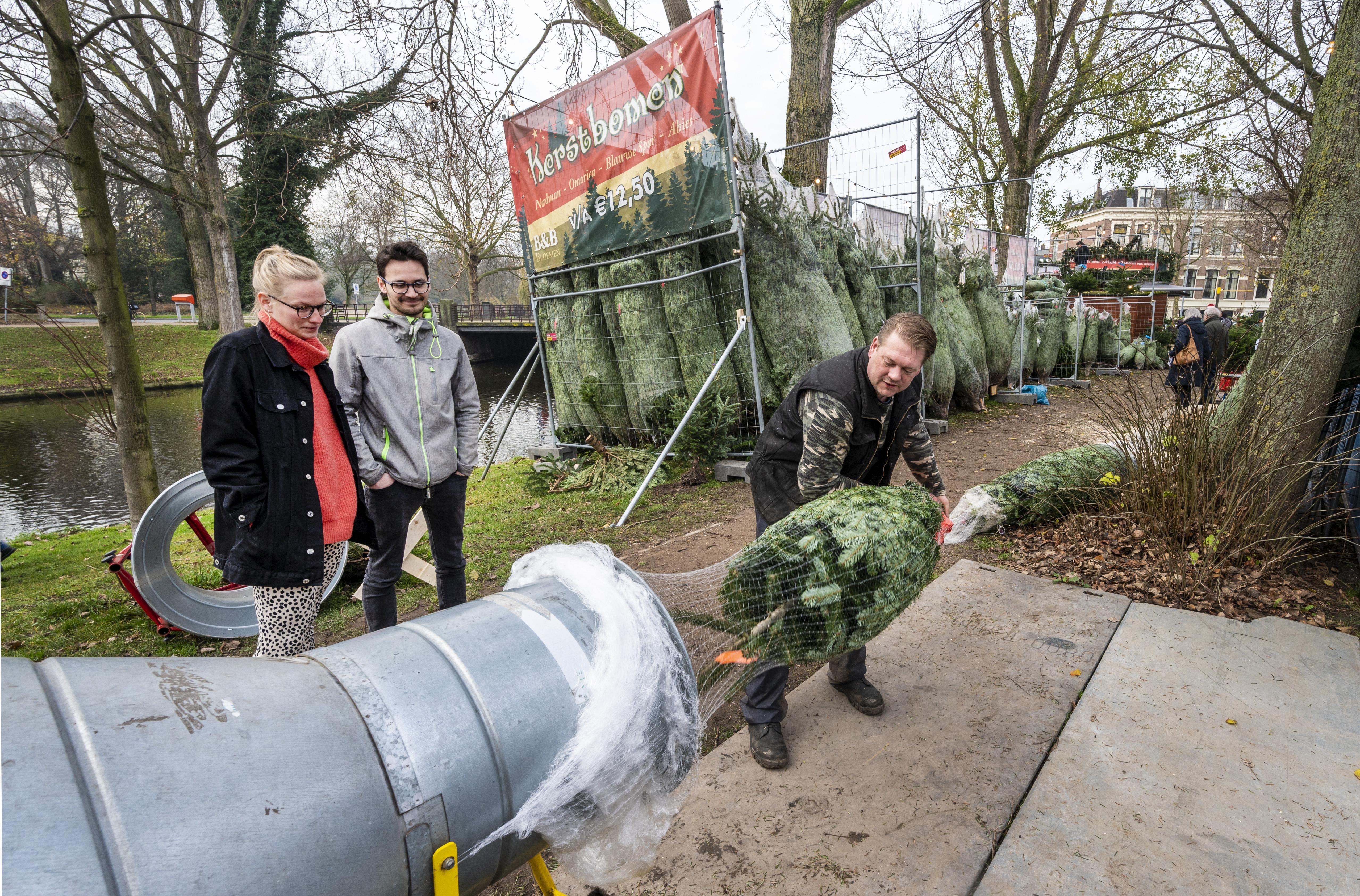 Haarlemse jacht op kerstbomen is weer begonnen: 'Alleen ballen en een kabouter'