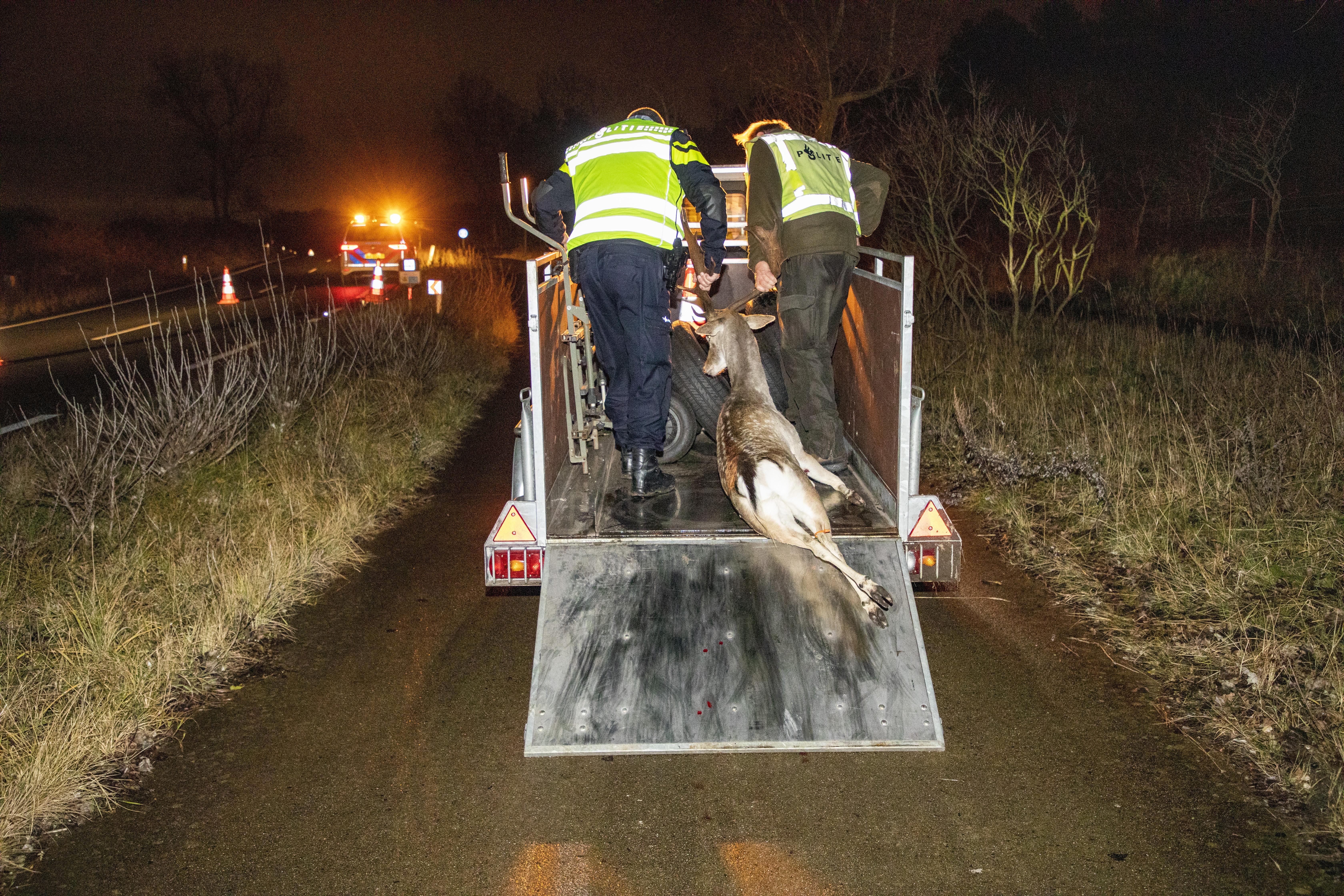Het blijft behelpen met maatregelen om herten te weren van spoor en Zeeweg in Overveen