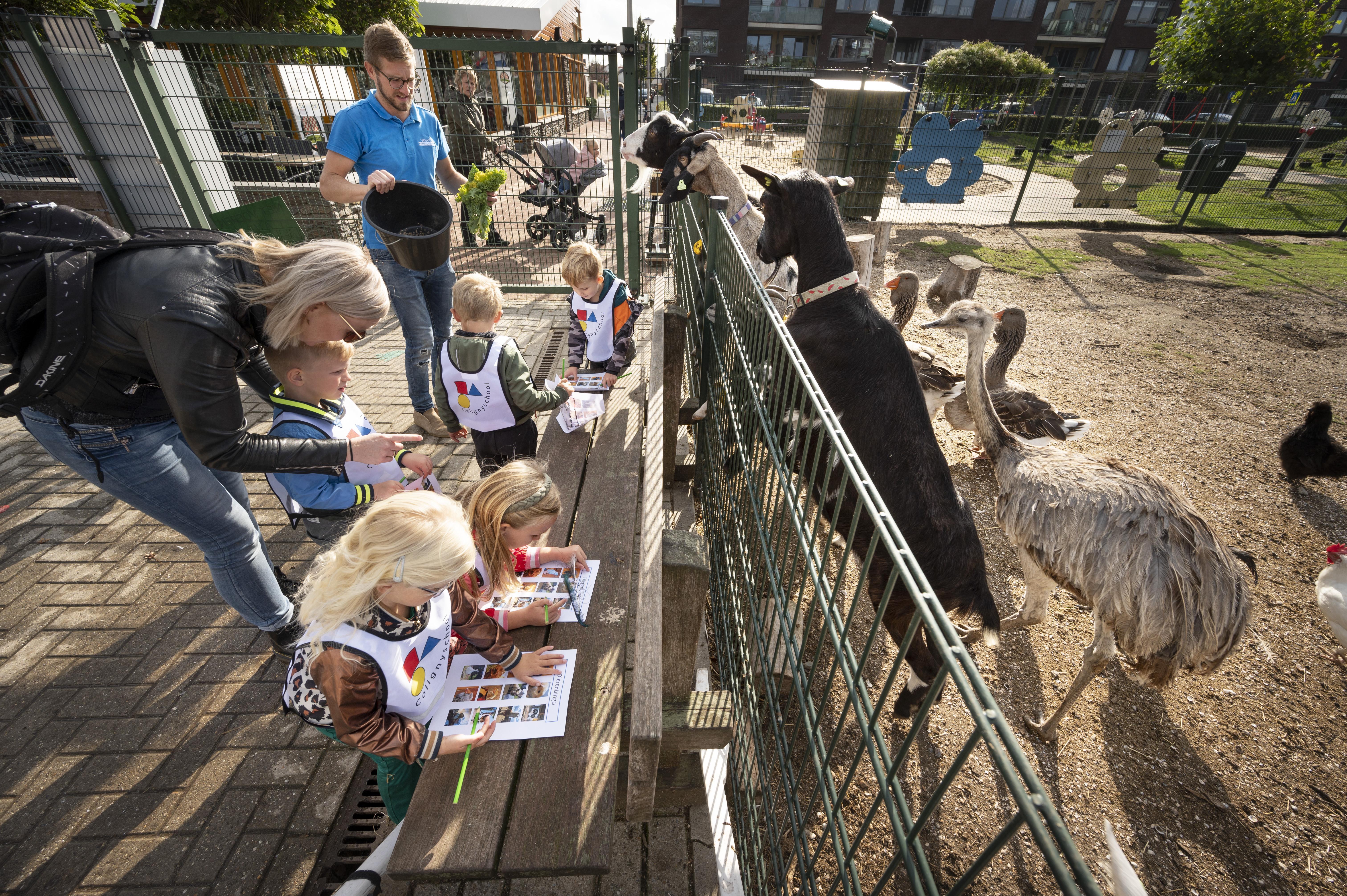 Bijna wegbezuinigde Rijnsburgse dierenweide Westerweide redt het nu grotendeels op eigen kracht: 'Het dorp heeft zich achter ons geschaard'