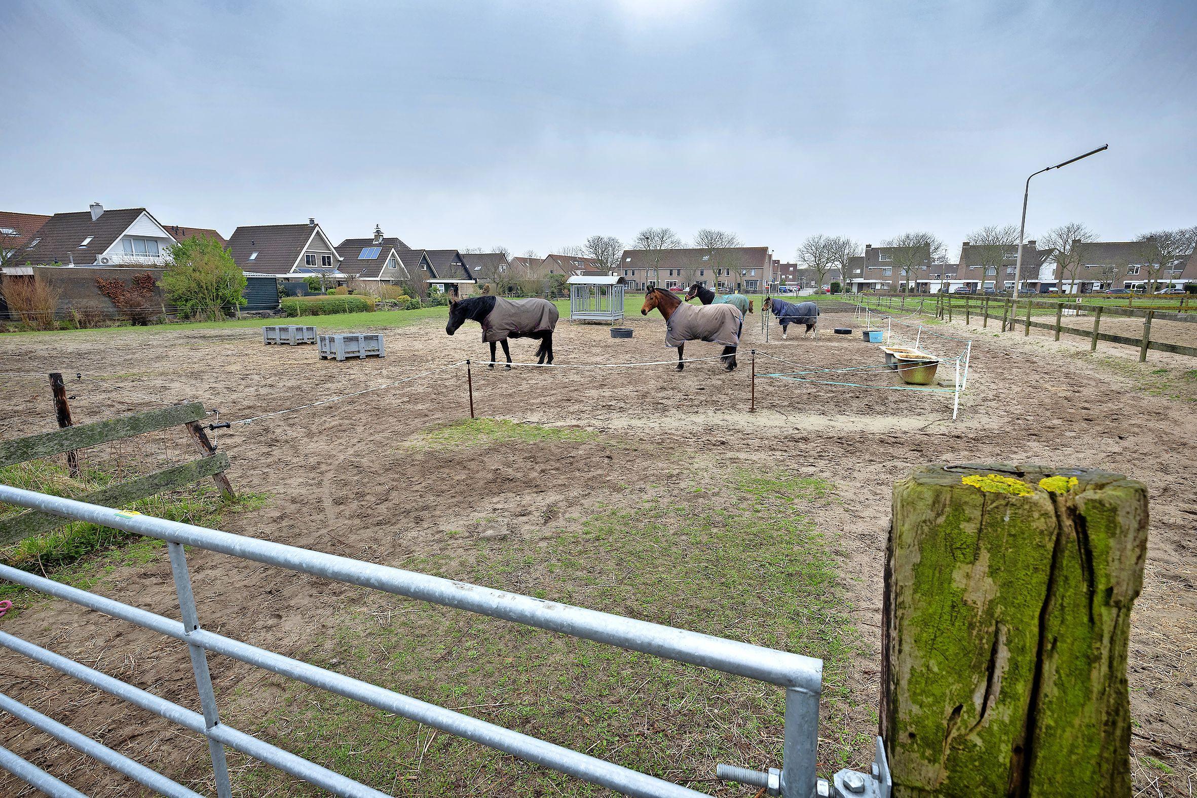 Vijftig nieuwe woningen op plek Schoorl Paardenpension in Velserbroek: 'elke privéparkeerplaats krijgt oplaadpunt voor elektrische auto's'