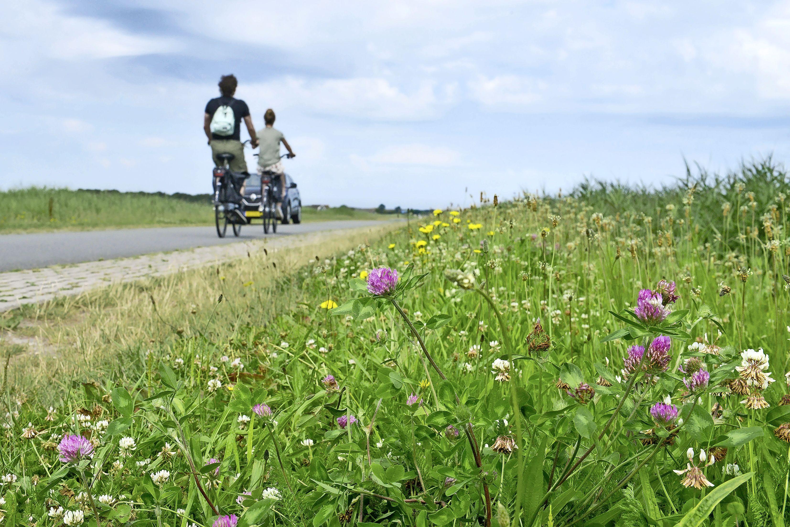 Prachtige bermen vol veldbloemen. Tot de maaier langs komt. 'Als je in deze tijd van het jaar alles plat maait, dan zorg je er in hele gebieden voor dat er geen voedsel te vinden is'
