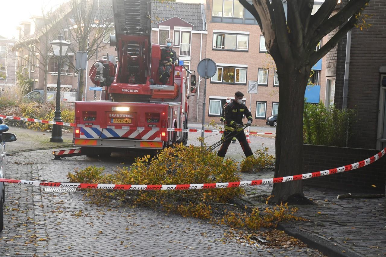 Vrachtwagen rijdt flinke tak van boom af in Leiden. Bestuurder gaat ervandoor. Toch zijn bewoners vooral boos op gemeente