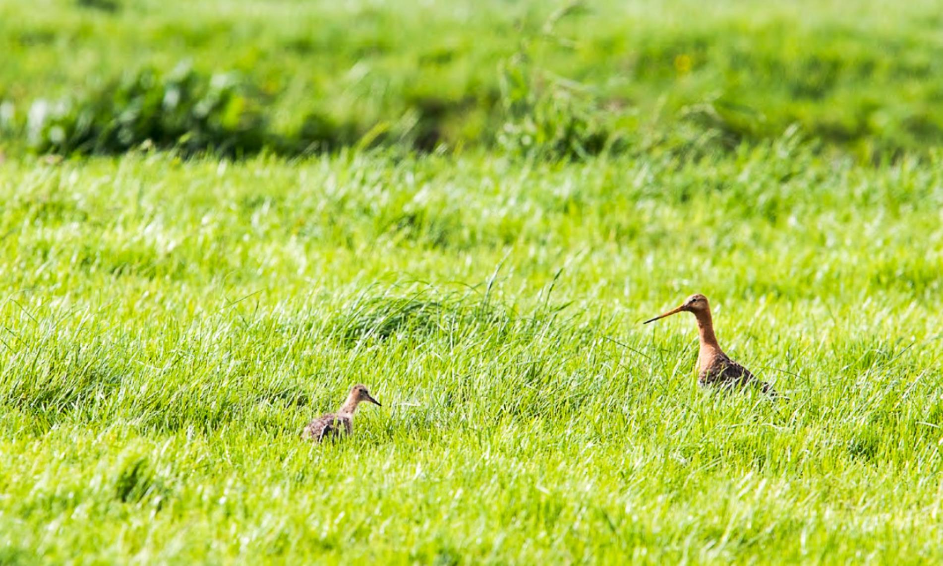 Teylingen kan meer doen voor beschermen van vogels