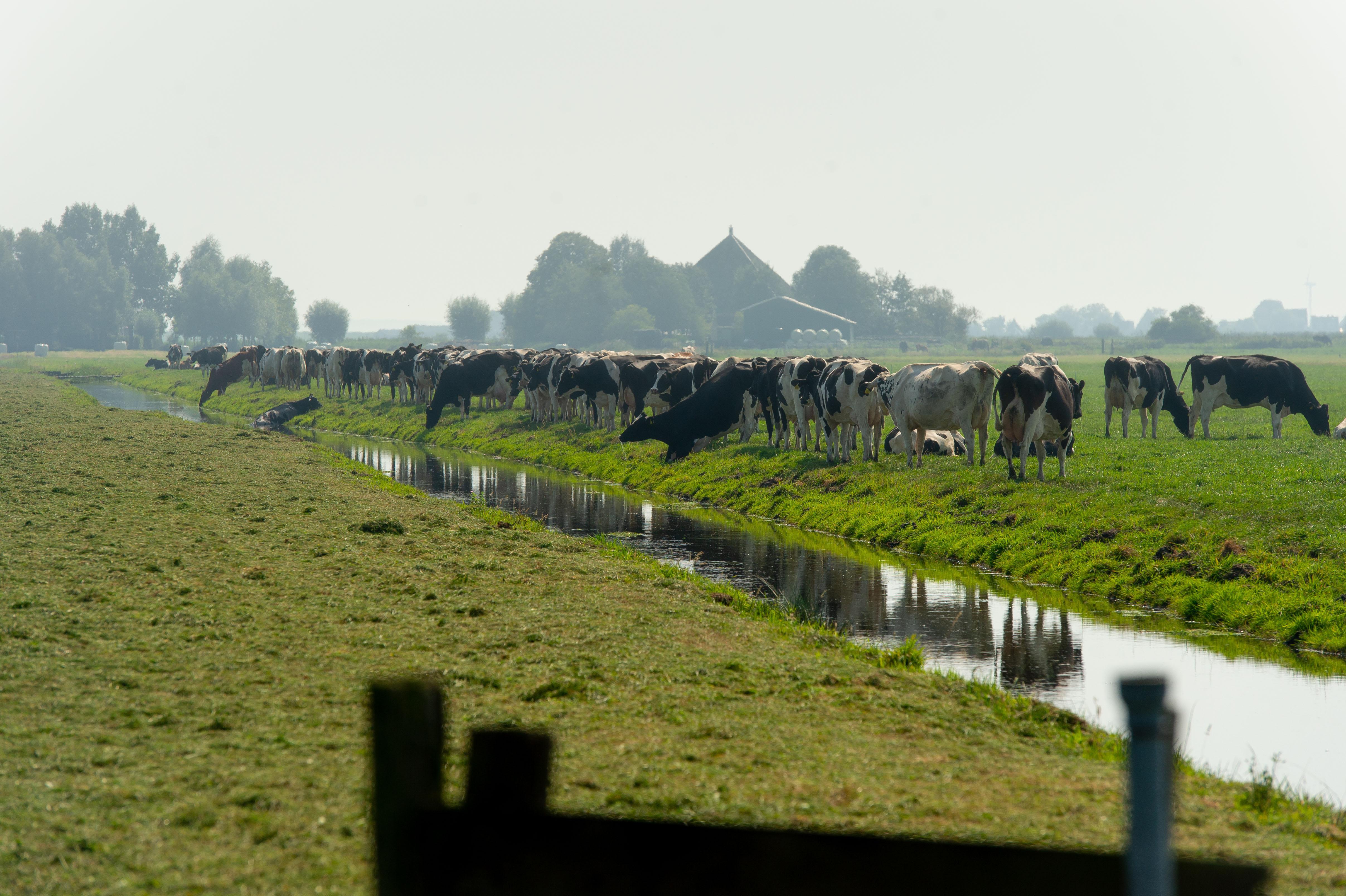 Waterlandse boeren bij Goudriaankanaal willen naast natuurvisie ook een landbouwvisie. 'Het is hier al een weidevogelparadijs'