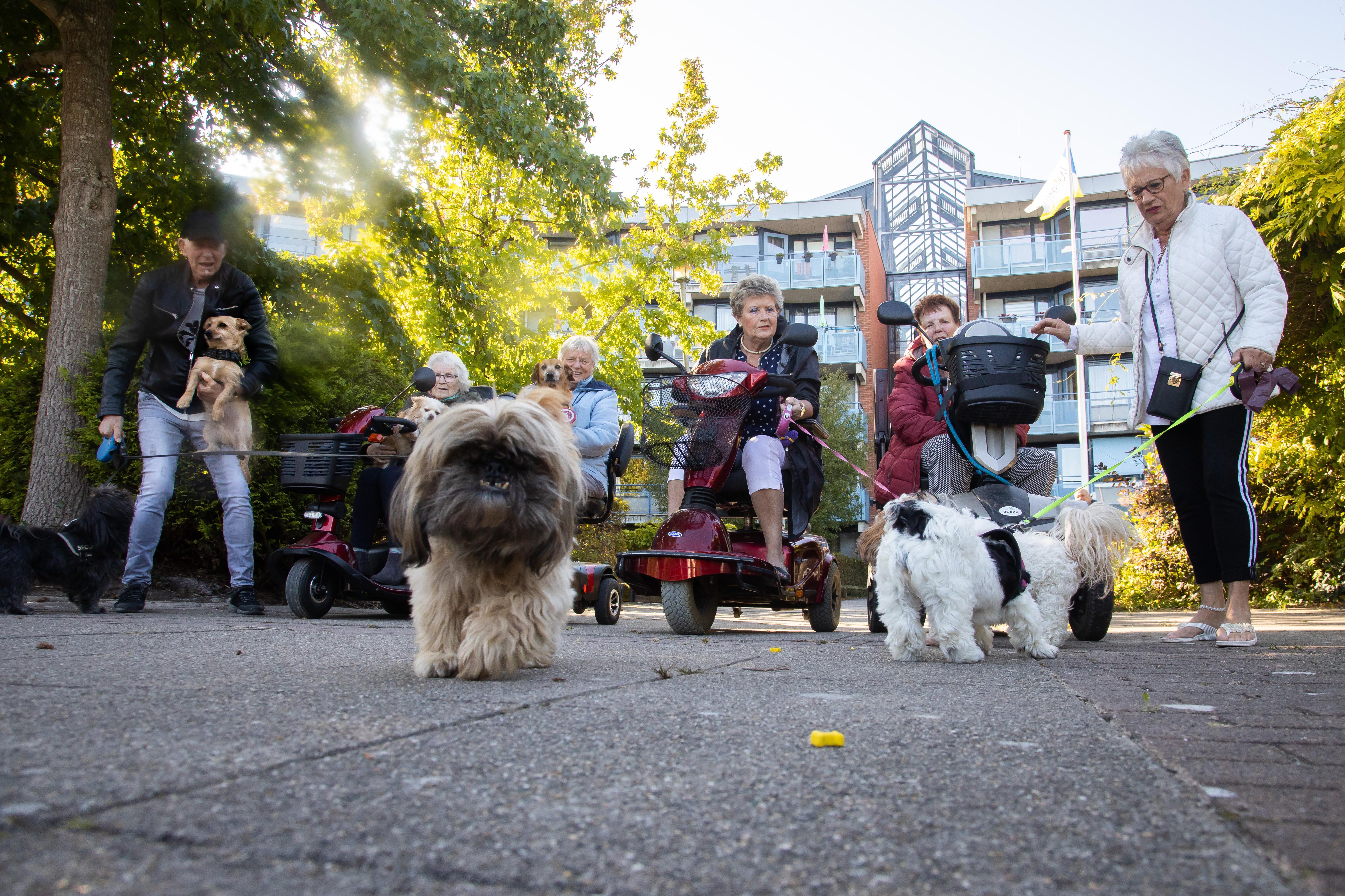 Hondenclub verdrijft eenzaamheid bij bewoners Betsy Perk in Hoorn: 'En het scheelt ook een hoop geld, uitlaatservice kunnen wij van onze AOW niet betalen'