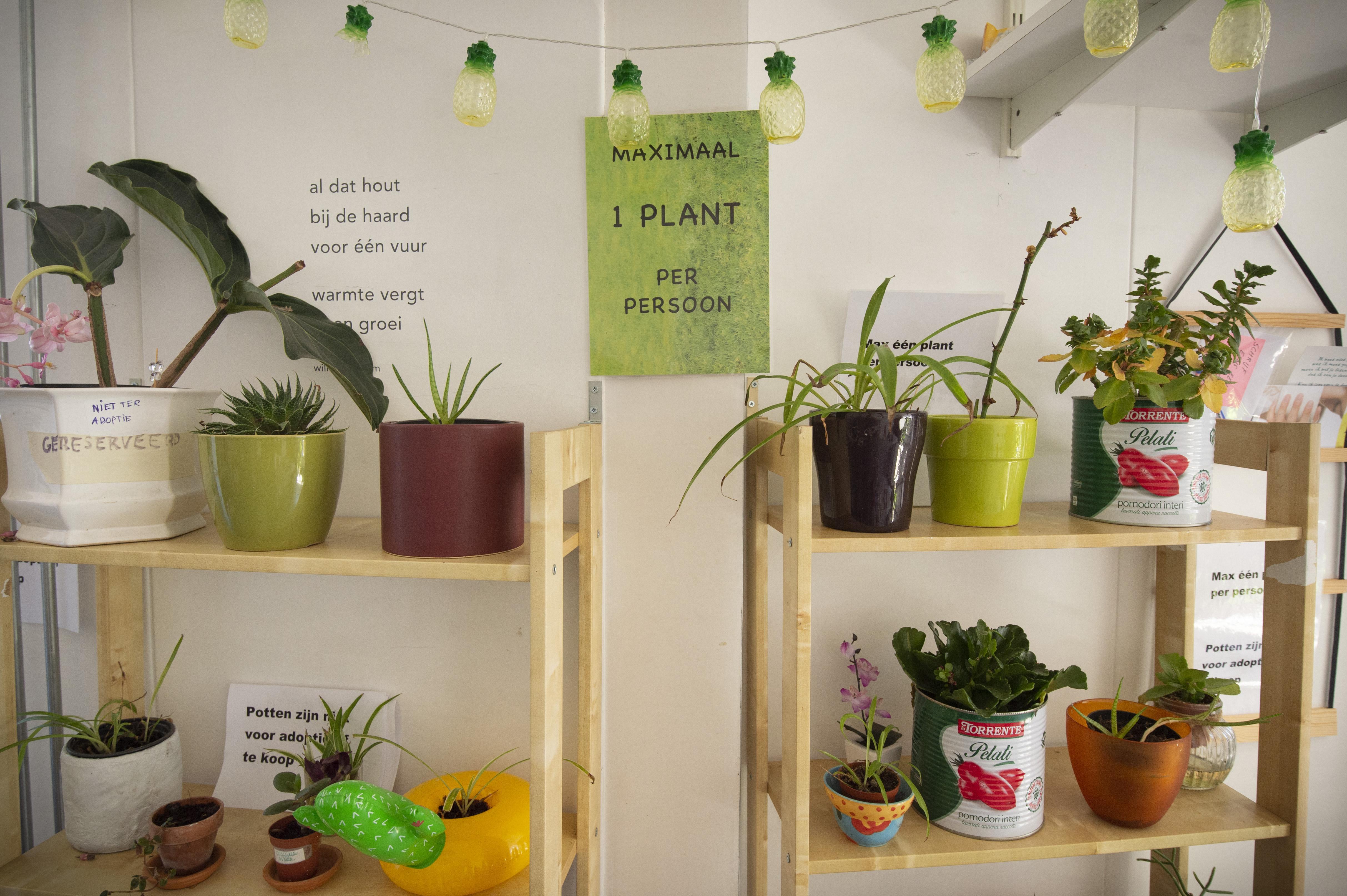 Plantenasiel Leiden voorziet in een behoefte. 'Een plant maakt van je huis een thuis in deze coronatijd'